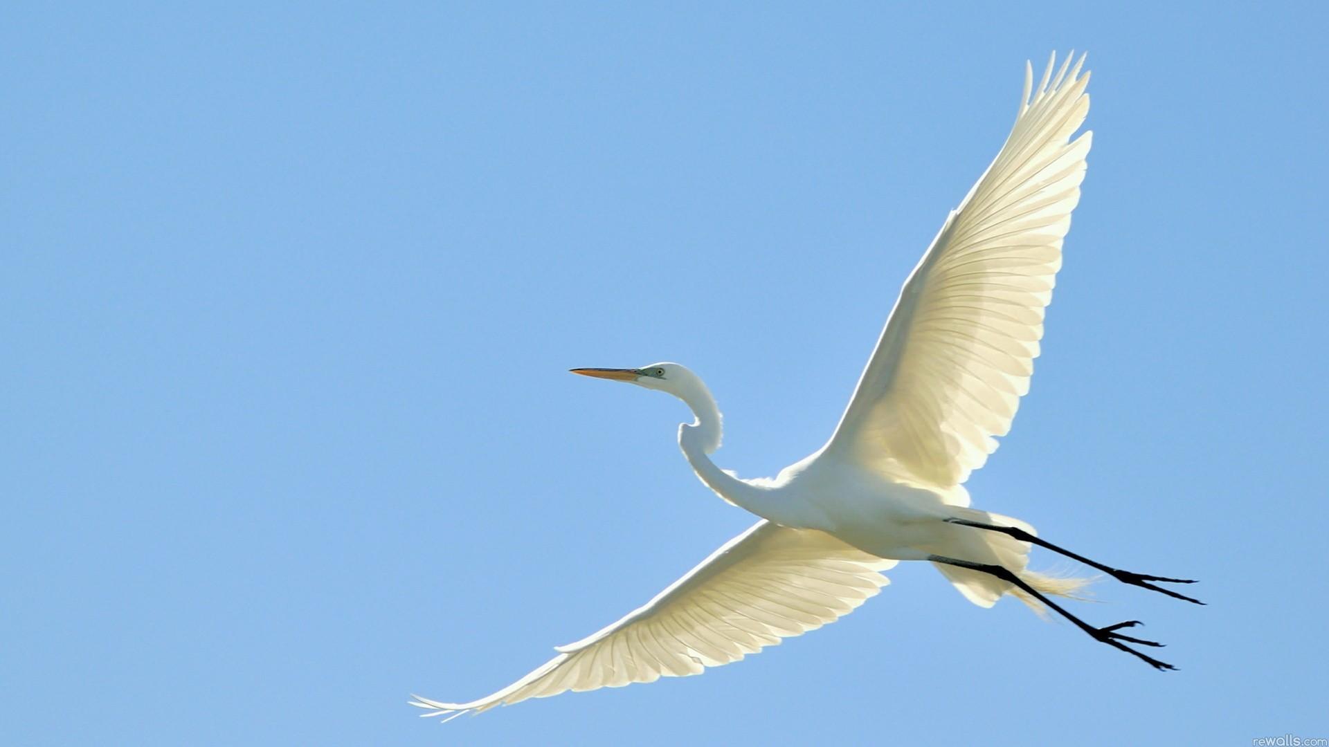 Res: 1920x1080, Heron Birds HD Images