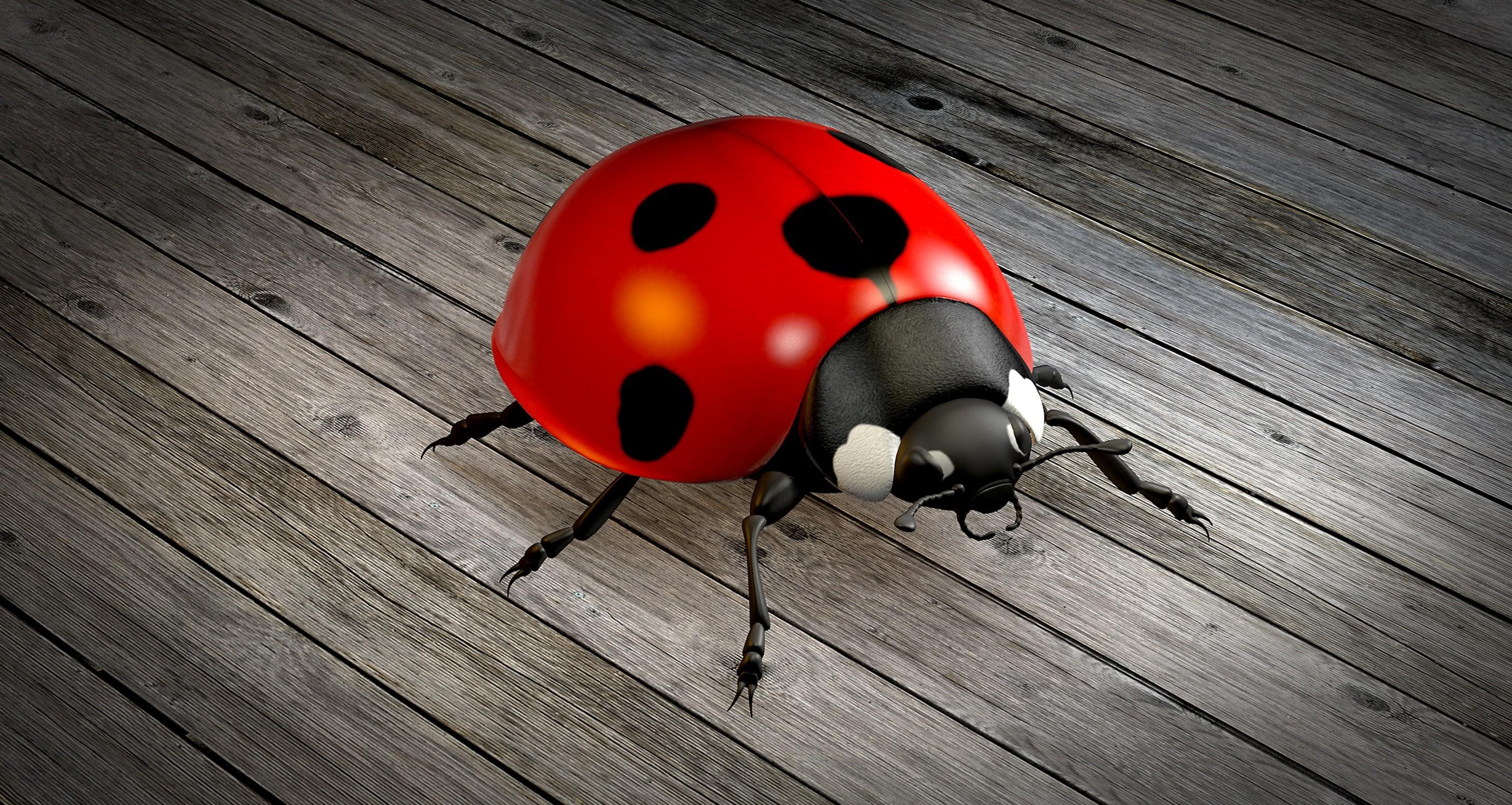 Res: 2800x1491, LadyBug 3D Model