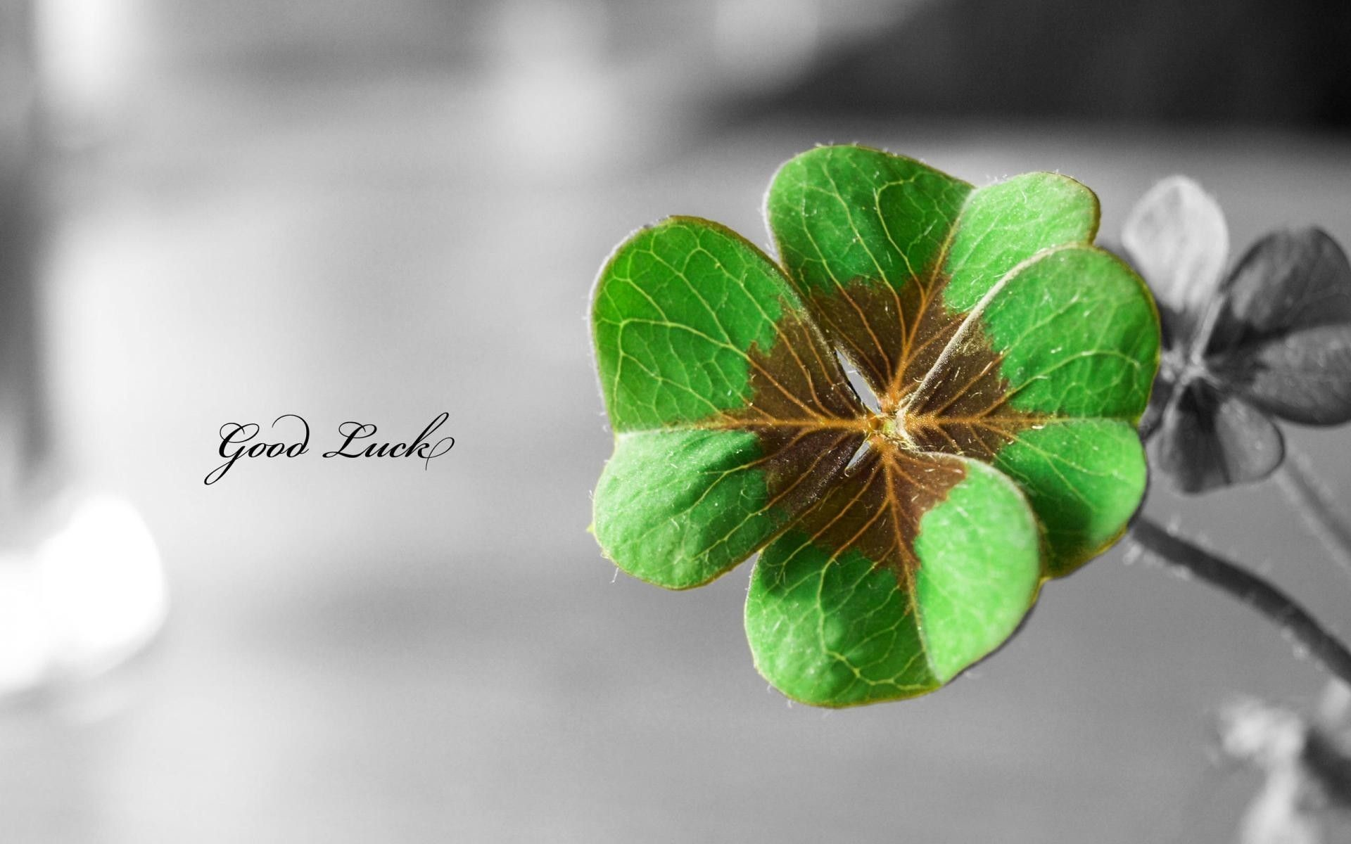 Res: 1920x1200, The leaves of four-leaf clovers as a lucky #charm can stand for: #Faith.  #Hope. #Love. #Luck