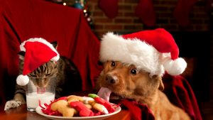 Christmas Puppies wallpapers