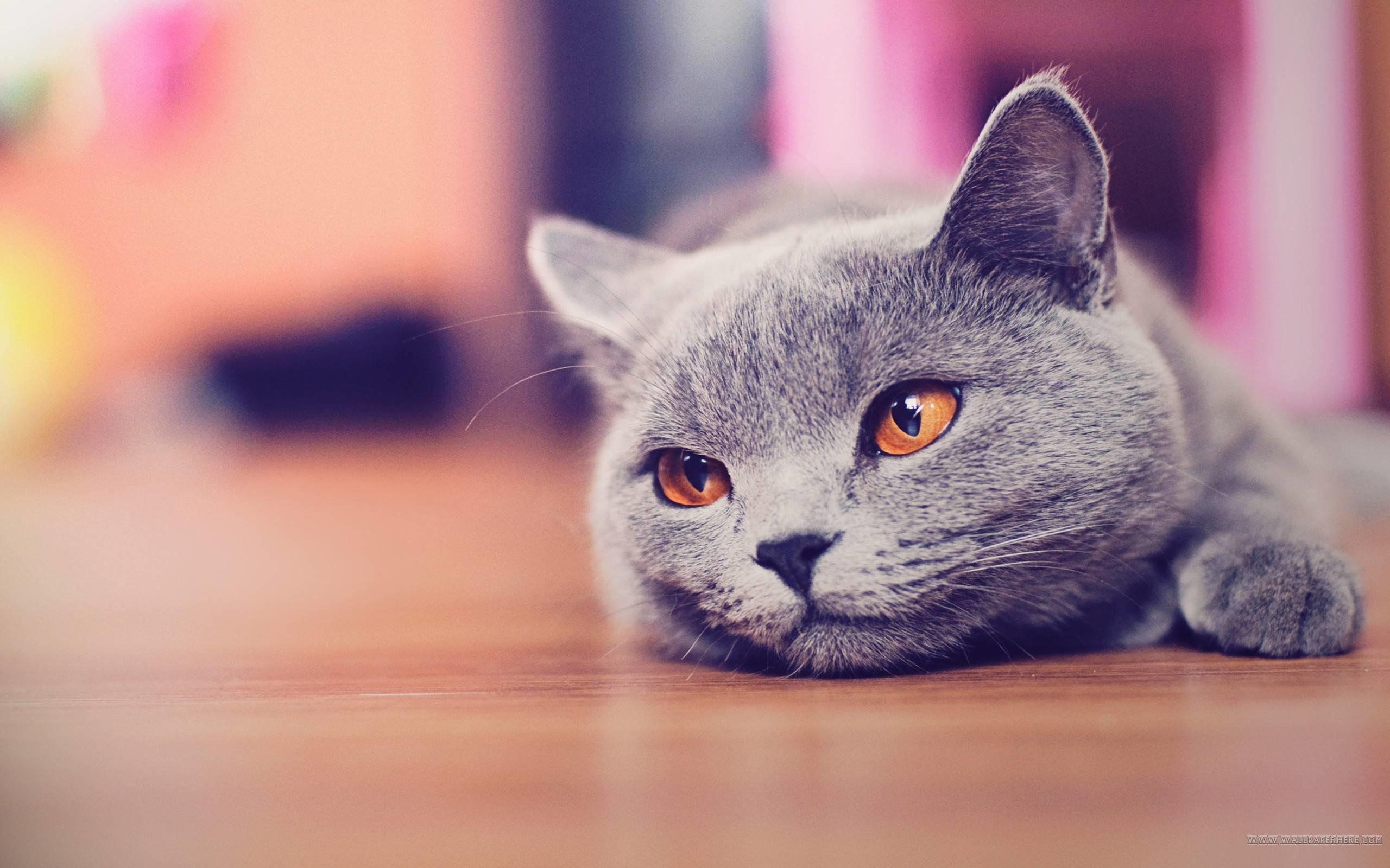 Res: 2560x1600, Cat Desktop Wallpaper Full Hd Cool 3d Cute Fluffy For Computer Pics