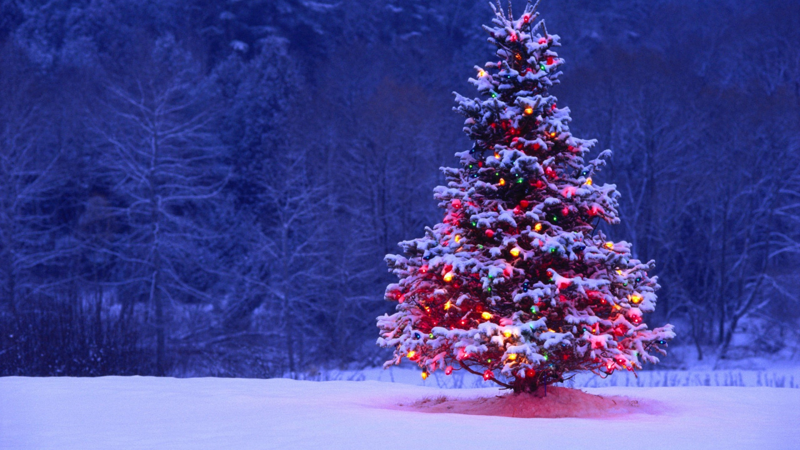 Res: 2560x1440, Christmas Tree Lights Snow Forest Holiday Desktop Wallpaper Uploaded by  DesktopWalls