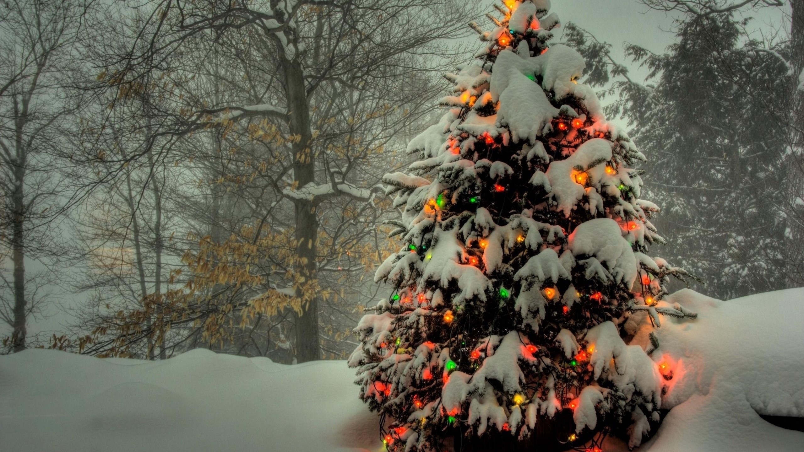 Res: 2560x1440,  Wallpaper tree, garland, new year, christmas, trees, snow, winter