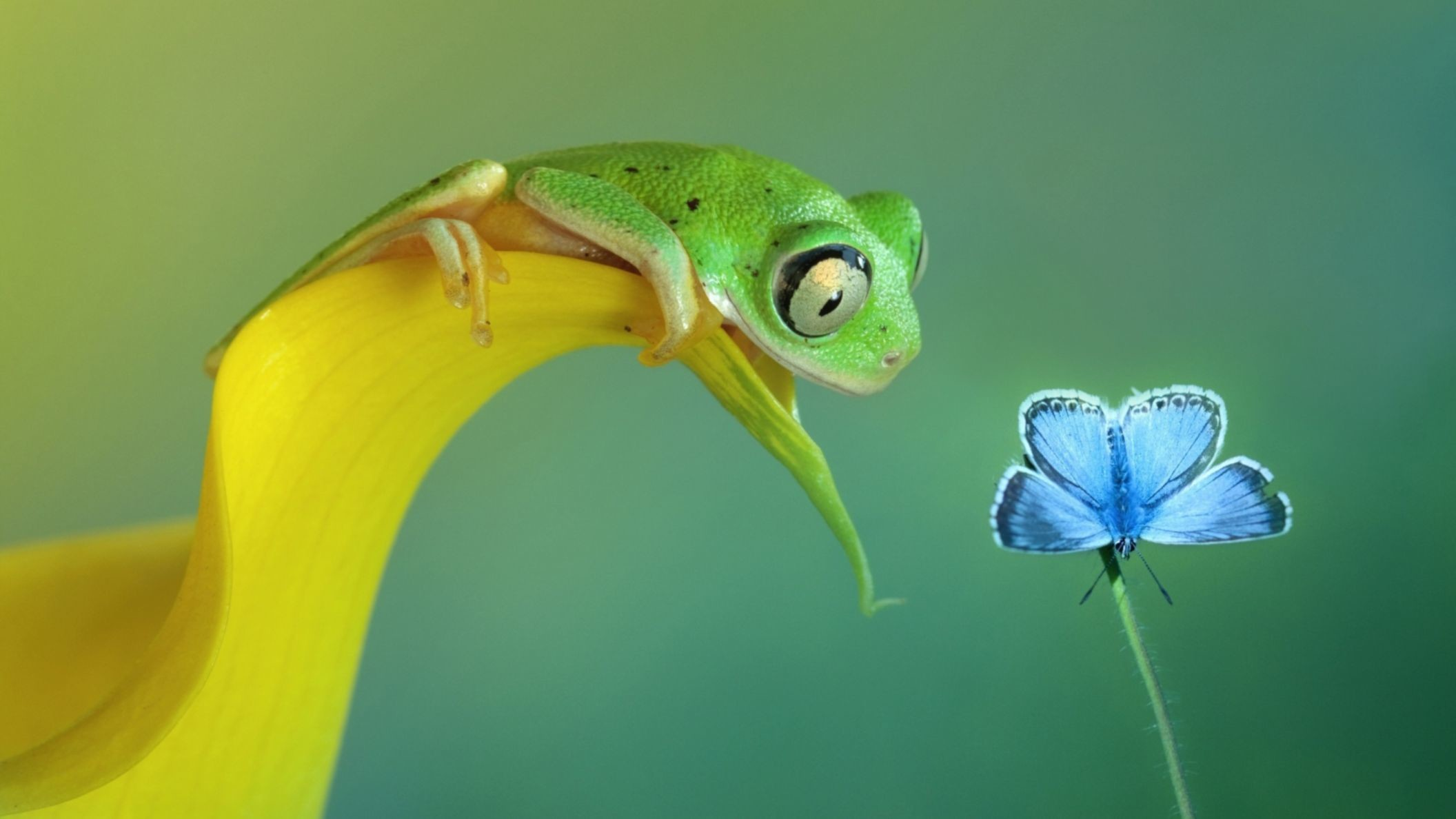 Res: 2112x1188, Funny Frog And Butterfly Macro Full HD Wallpaper