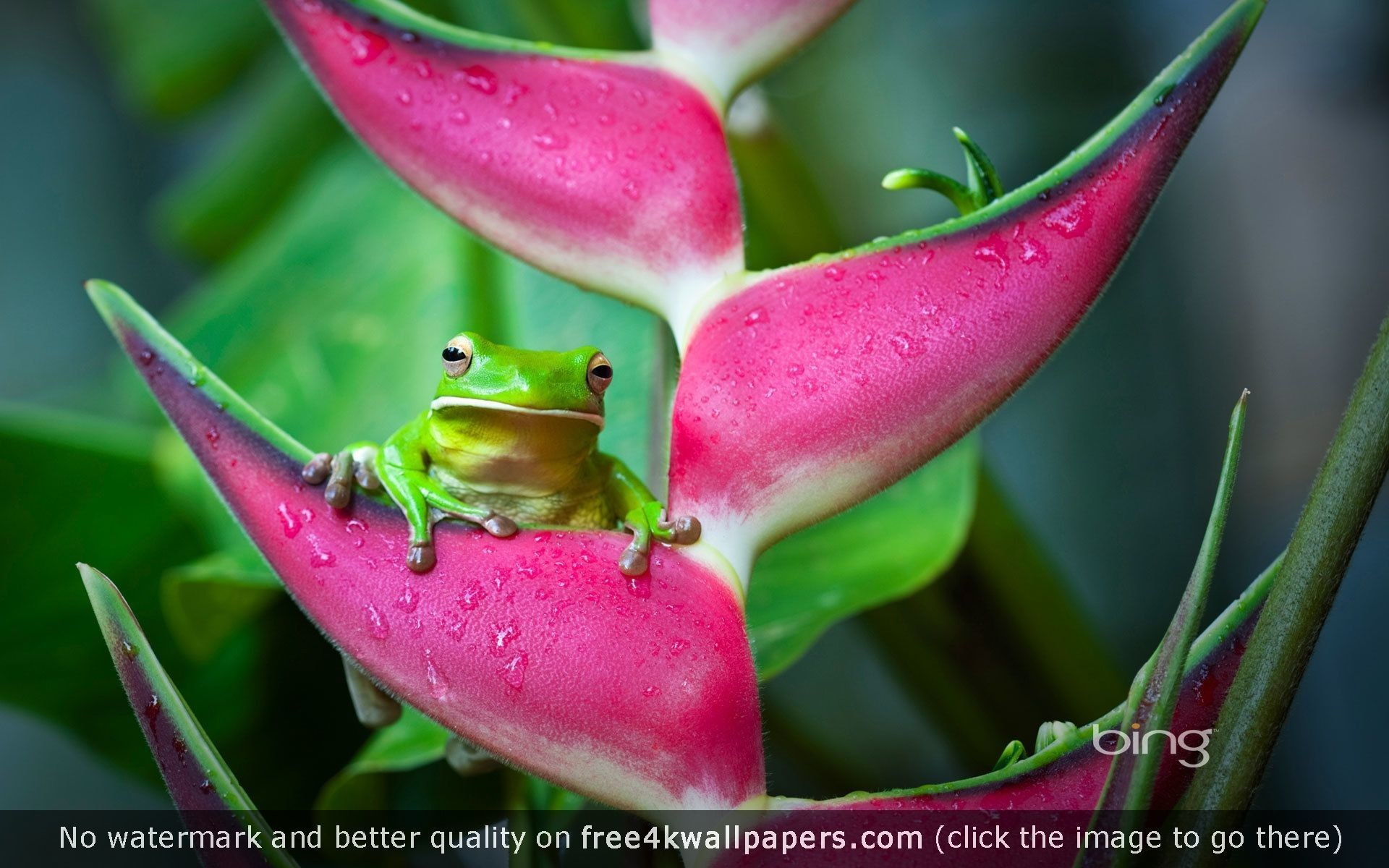 Res: 1920x1200, Best frog 4K or HD wallpapers for your PC, Mac or Mobile Device