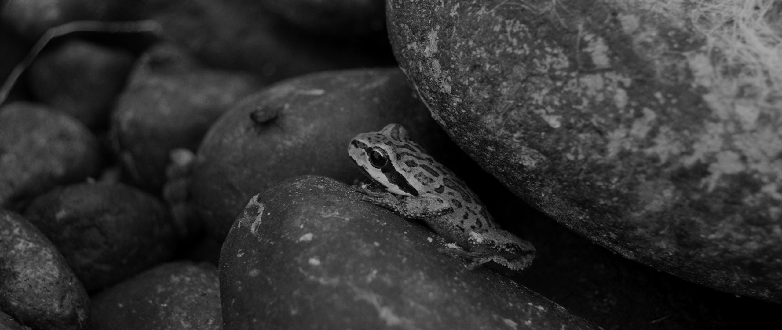 Res: 2560x1080, Froggy via Classy Bro