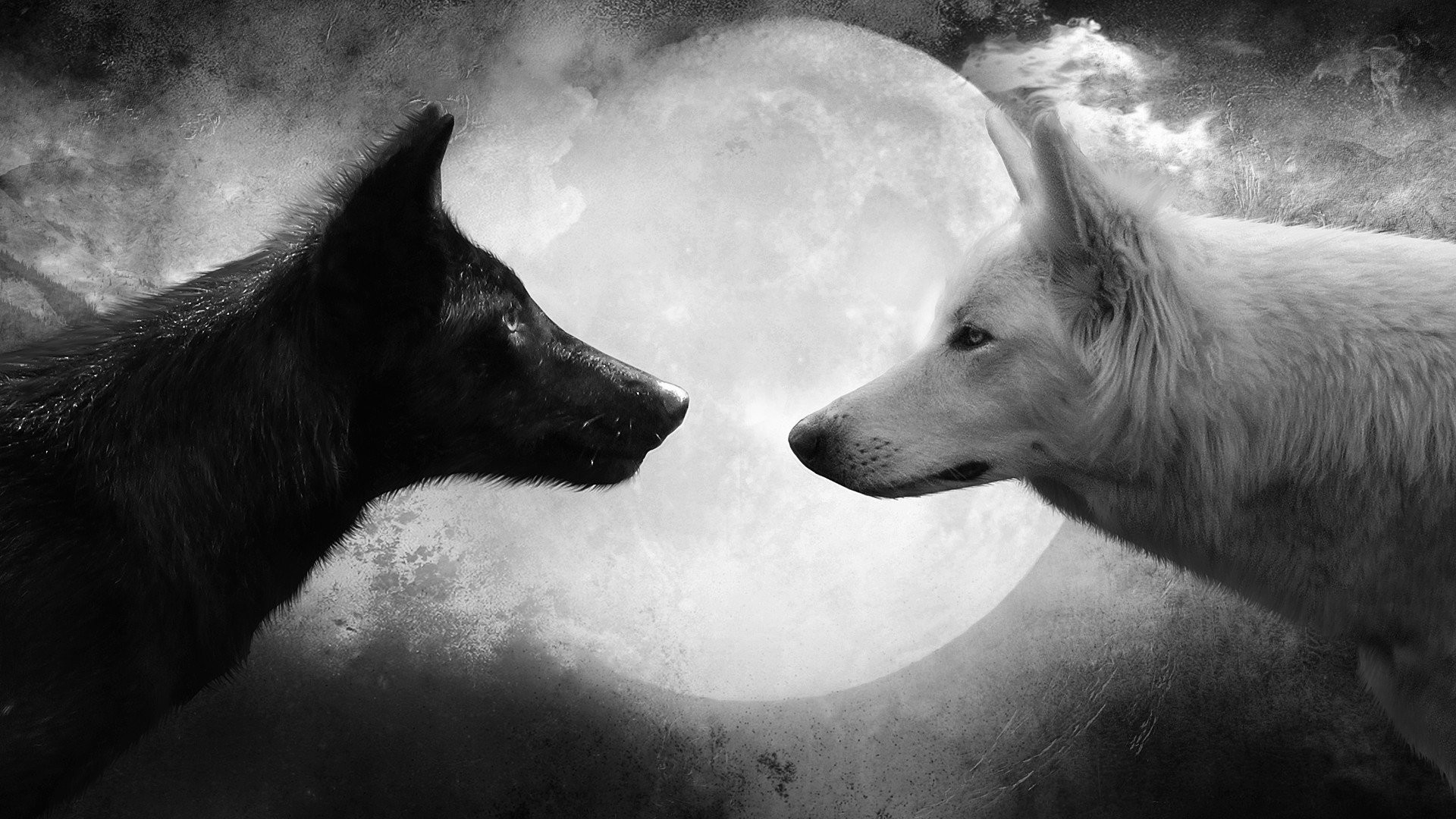 Res: 1920x1080, HD Wallpaper | Background Image ID:321139.  Animal Wolf