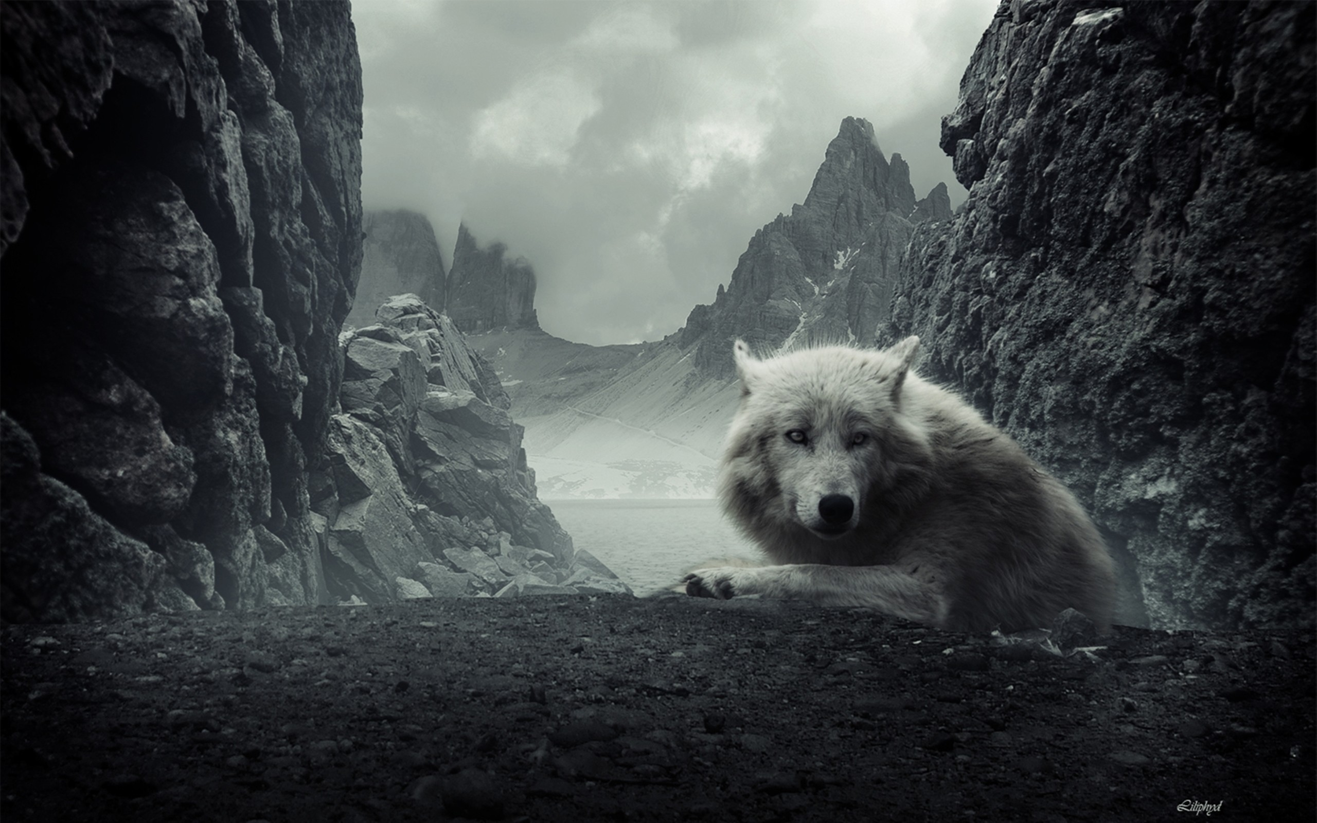 Res: 2560x1600, HD Wallpaper | Background Image ID:102853.  Animal Wolf