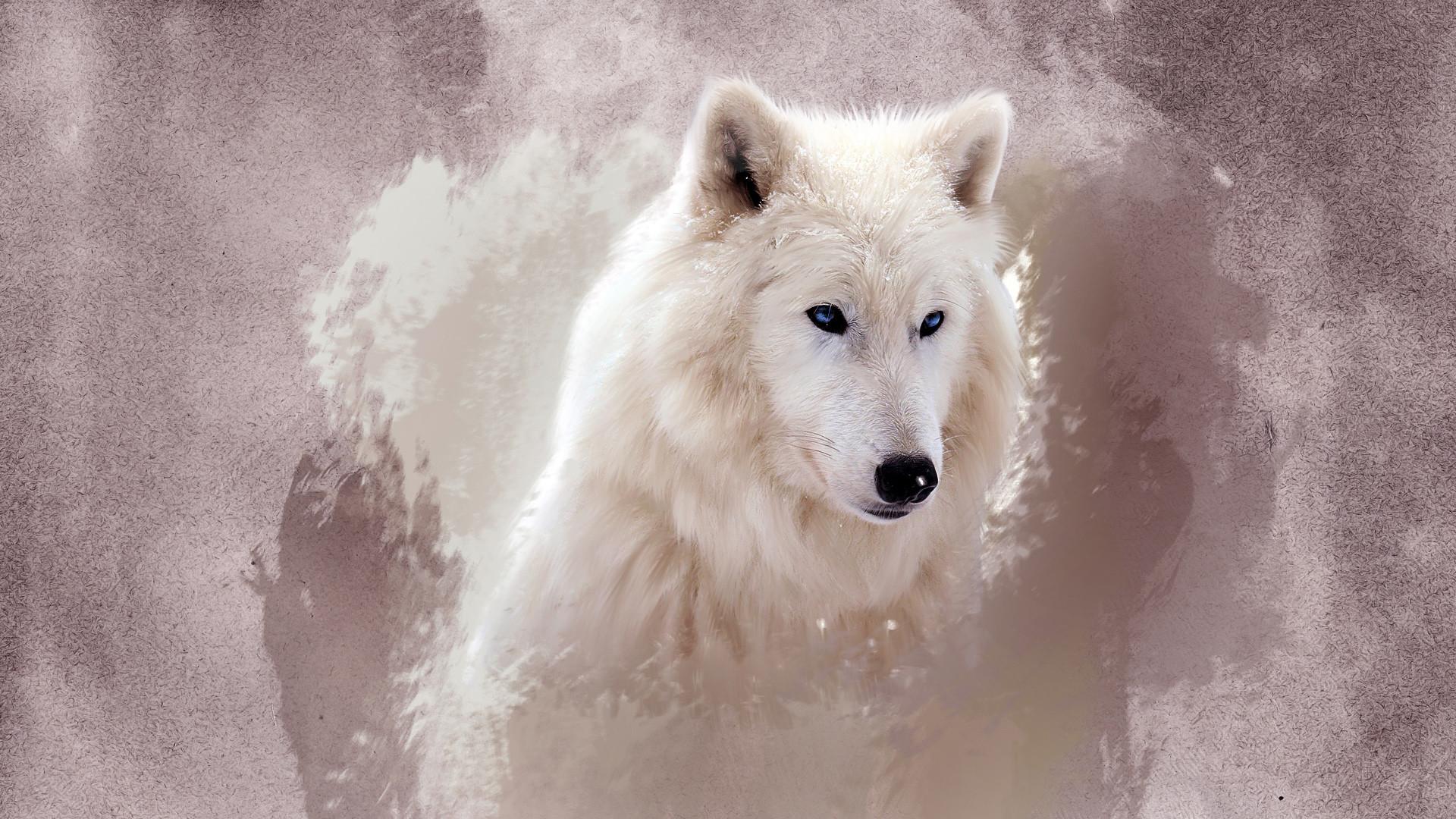 Res: 1920x1080, Author: MachiavelliCro. Tags: Wolf
