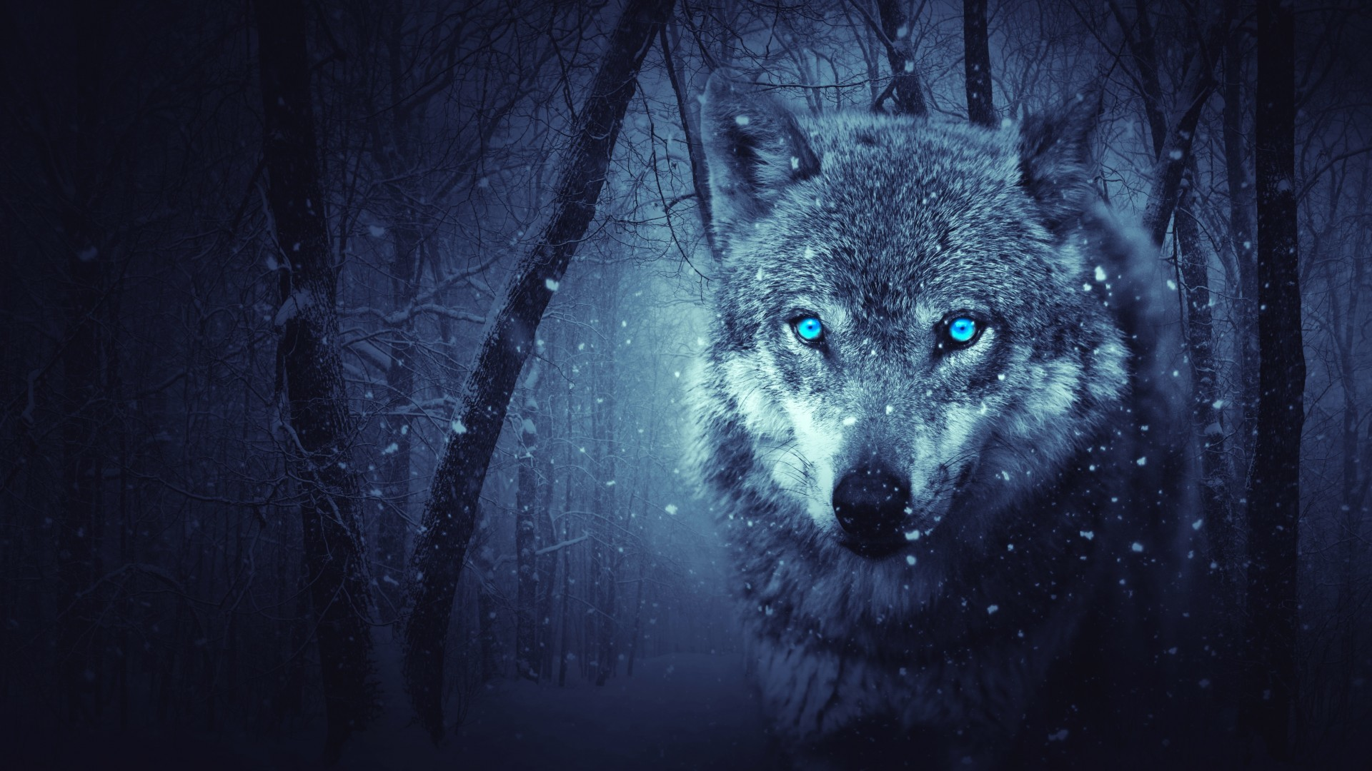 Res: 1920x1080, Wold Wolf Blue Eyes Scary Snowfall Winter Hd Wallpaper