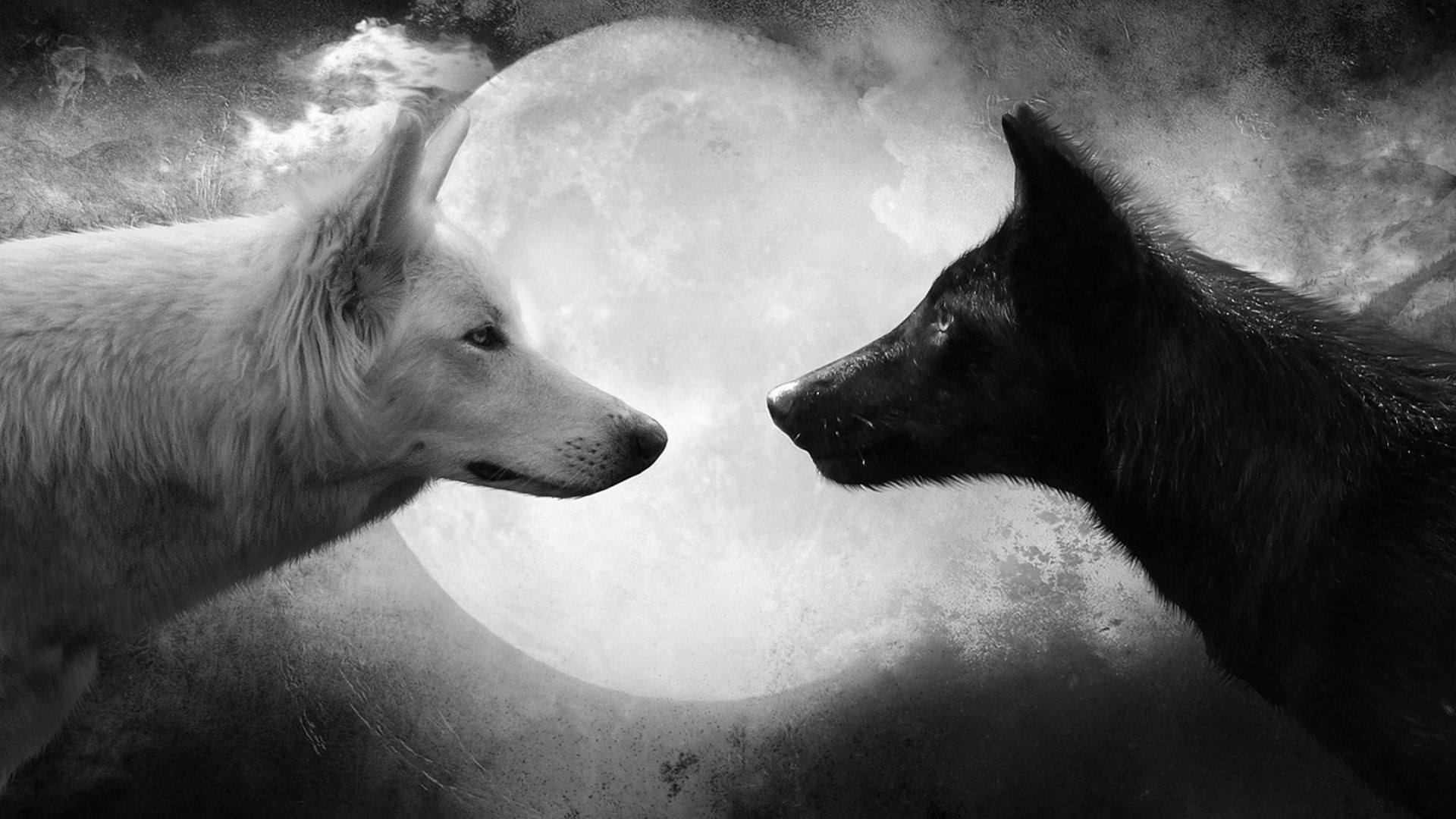 Res: 1920x1080, white and black wolf couple