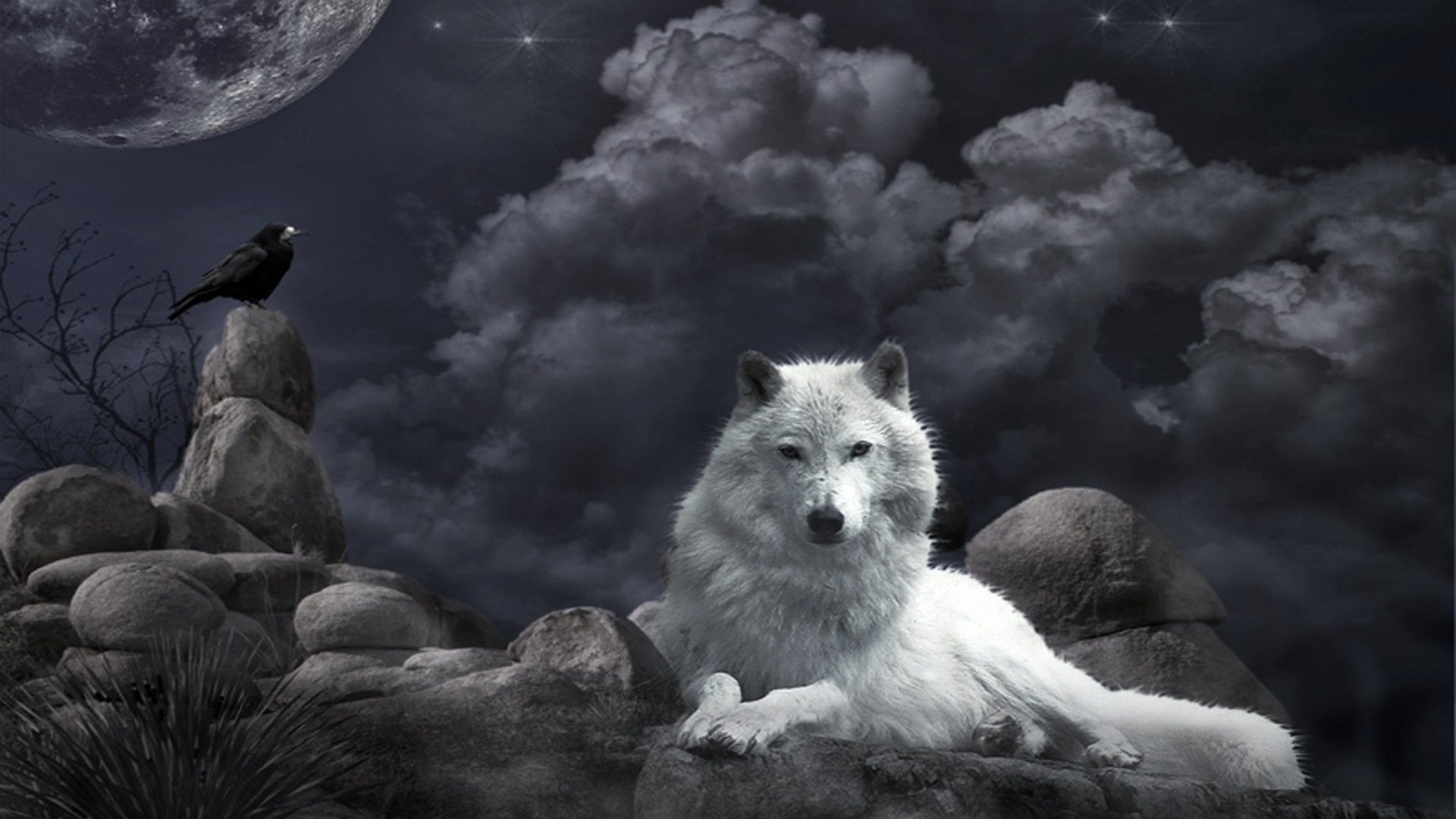 Res: 1920x1080, Wolf Wallpaper Awesome 955 Wolf Hd Wallpapers