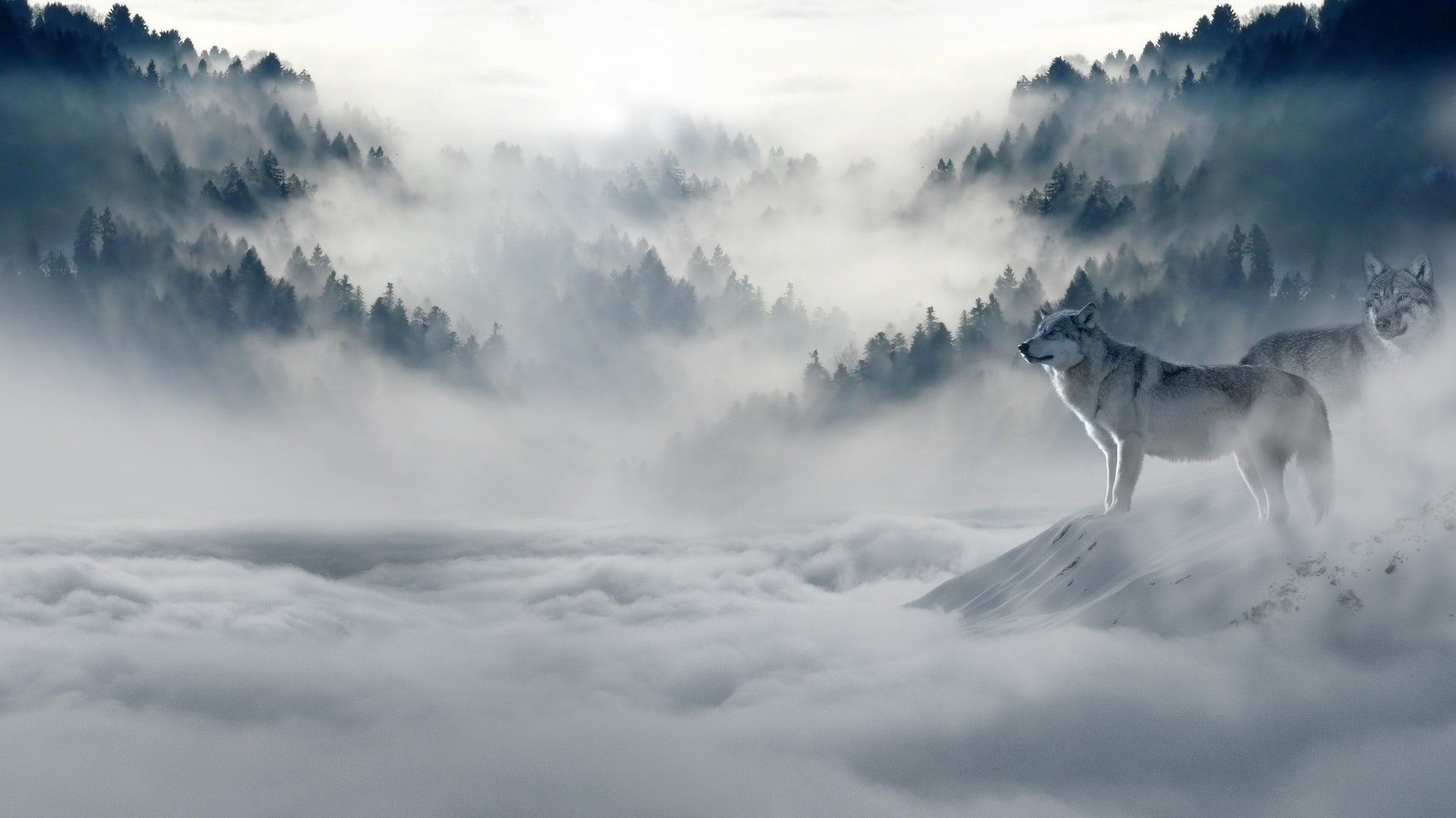 Res: 1920x1080, Wolf HD Wallpapers 1080p. Free Download