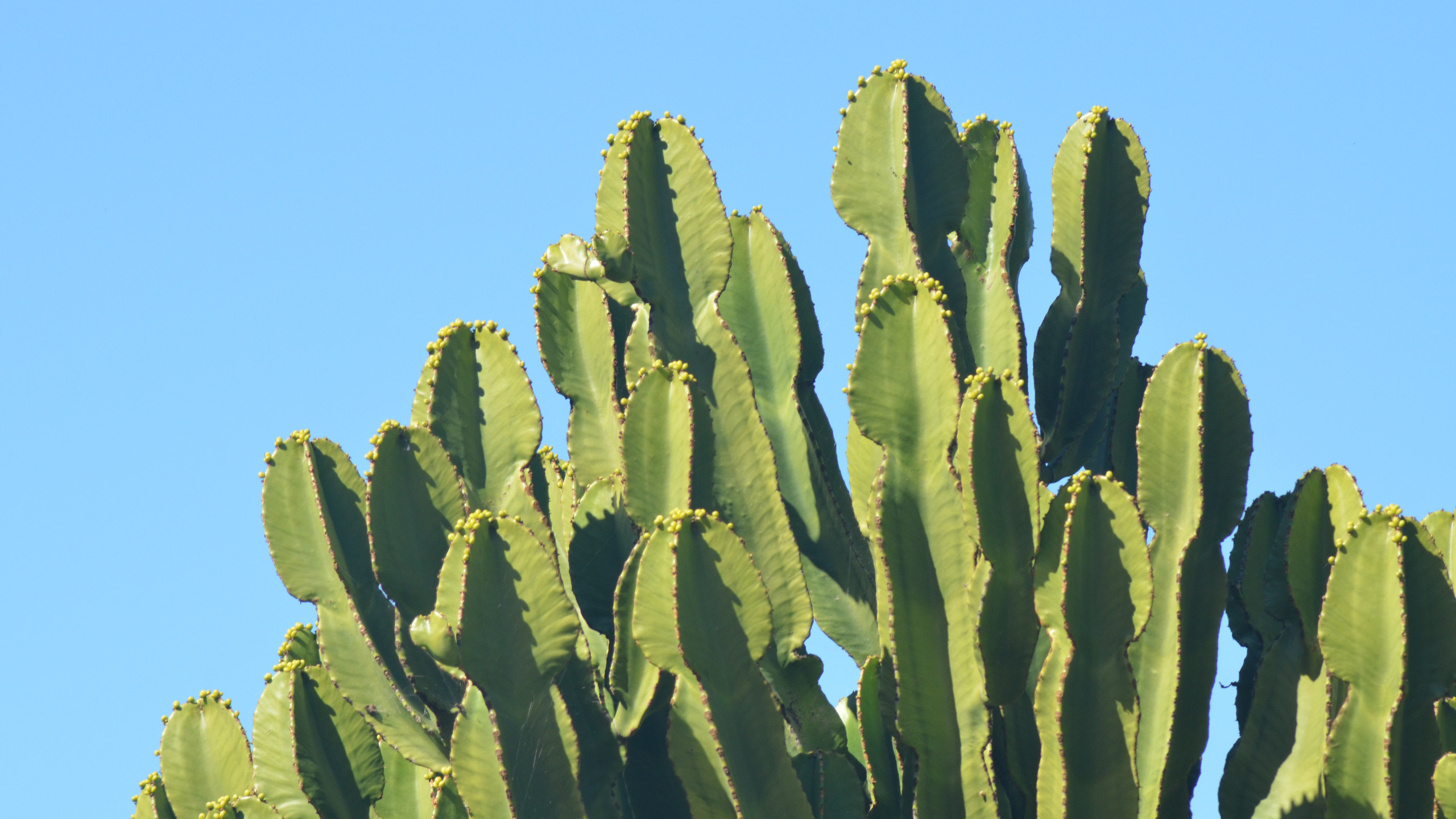 Res: 2560x1440, Cactus Images HD Wallpapers