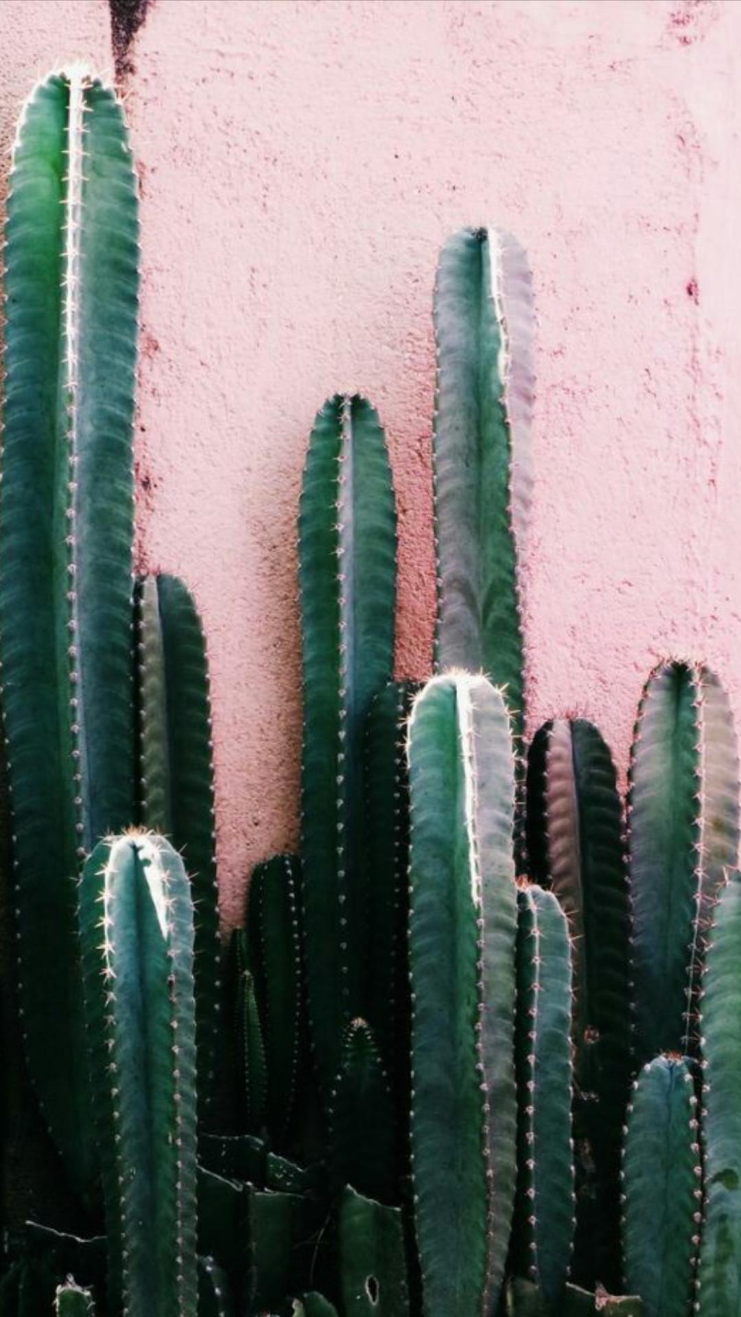 Get Desert Wallpaper Iphone Cactus JPG