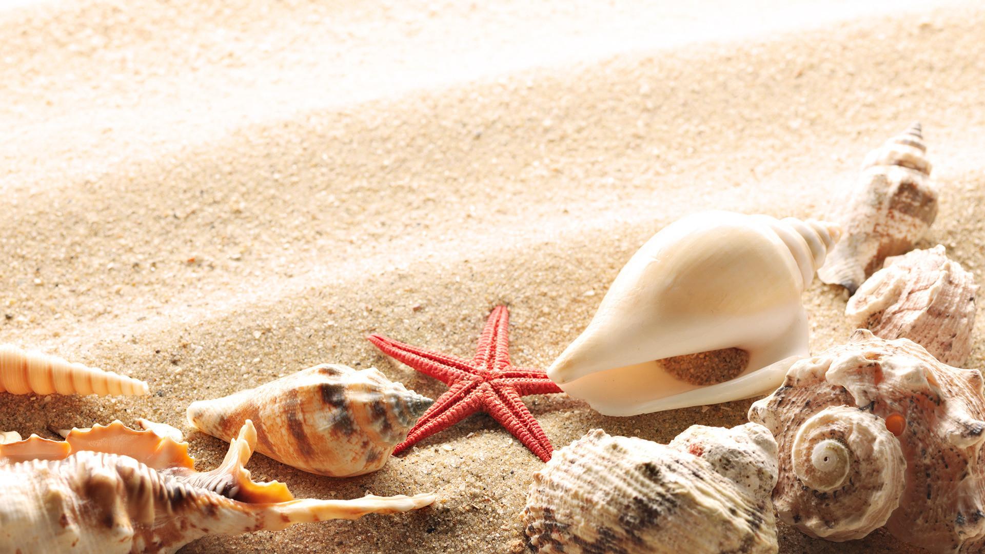Res: 1920x1080, Wallpaper-seashells-summer-beach-sand-sun-theme -macro-download-132777-.jpg