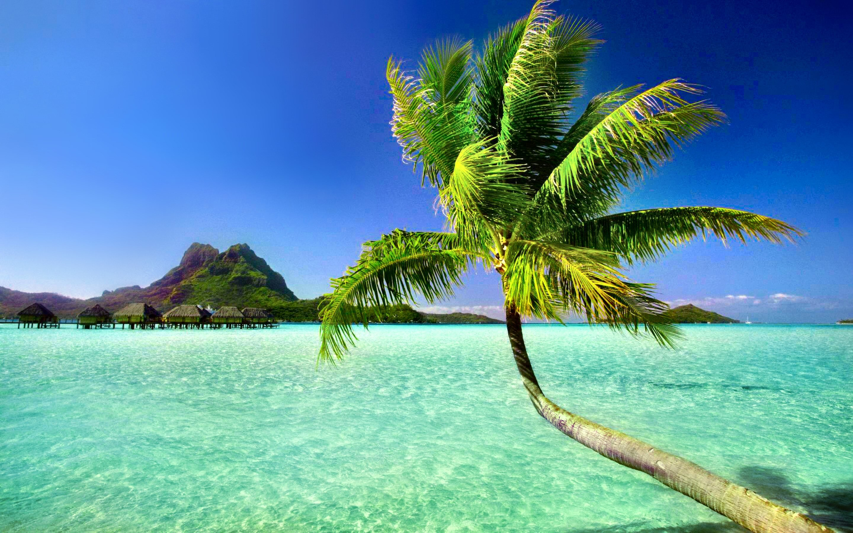 Res: 2880x1800, 353 Palm Tree HD Wallpapers Backgrounds Wallpaper Abyss - HD Wallpapers