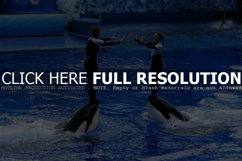 Res: 2816x1872, Seaworld Orlando Shamu (id: 44541)