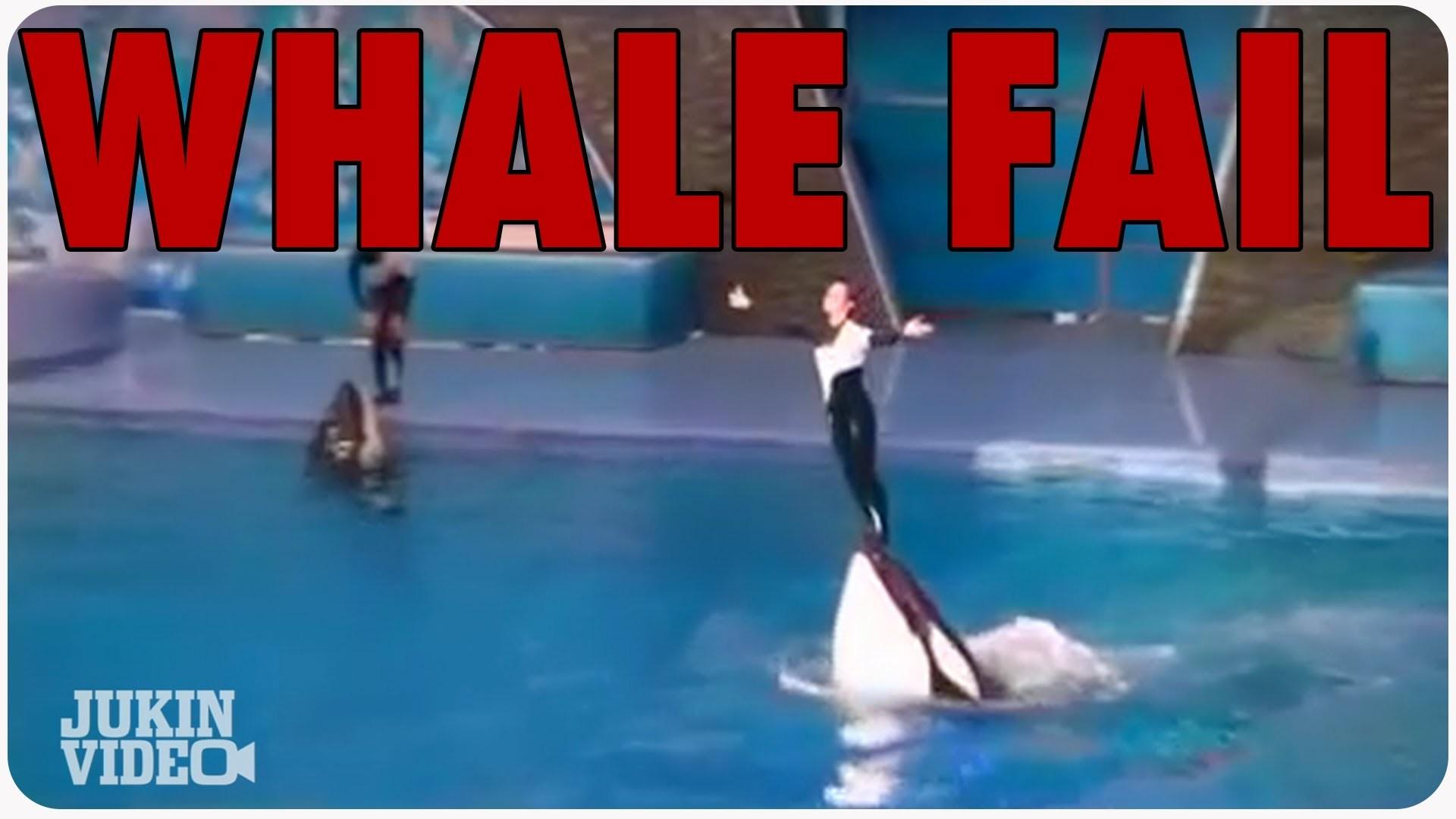 Res: 1920x1080, Whale Tail Fail | Shamu Trainer Falls