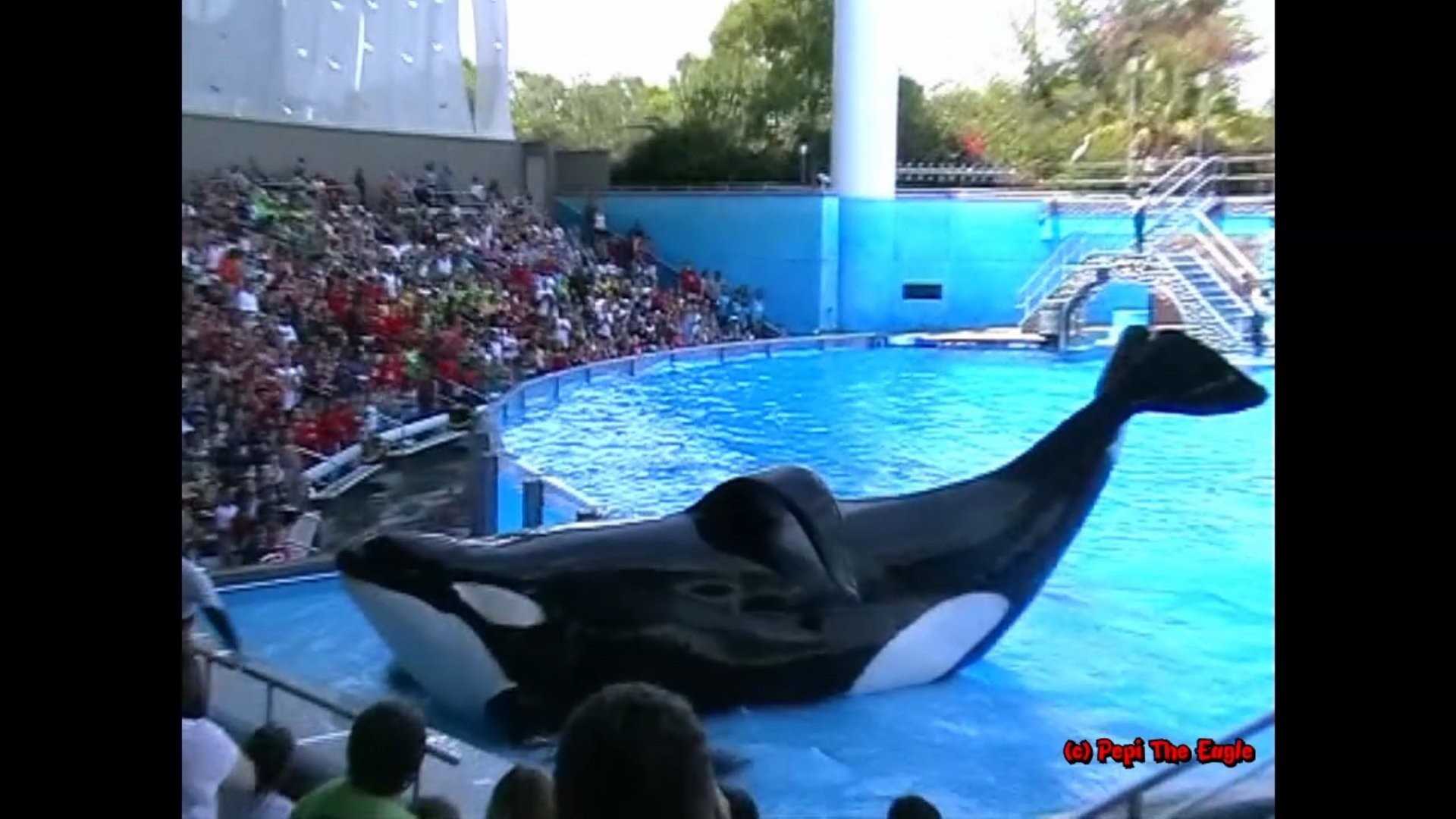 """Res: 1920x1080, The Complete SeaWorld Shamu """"Believe"""" Show Dawn Brancheau Tilikum Orca with  Trainers in the Water - YouTube"""