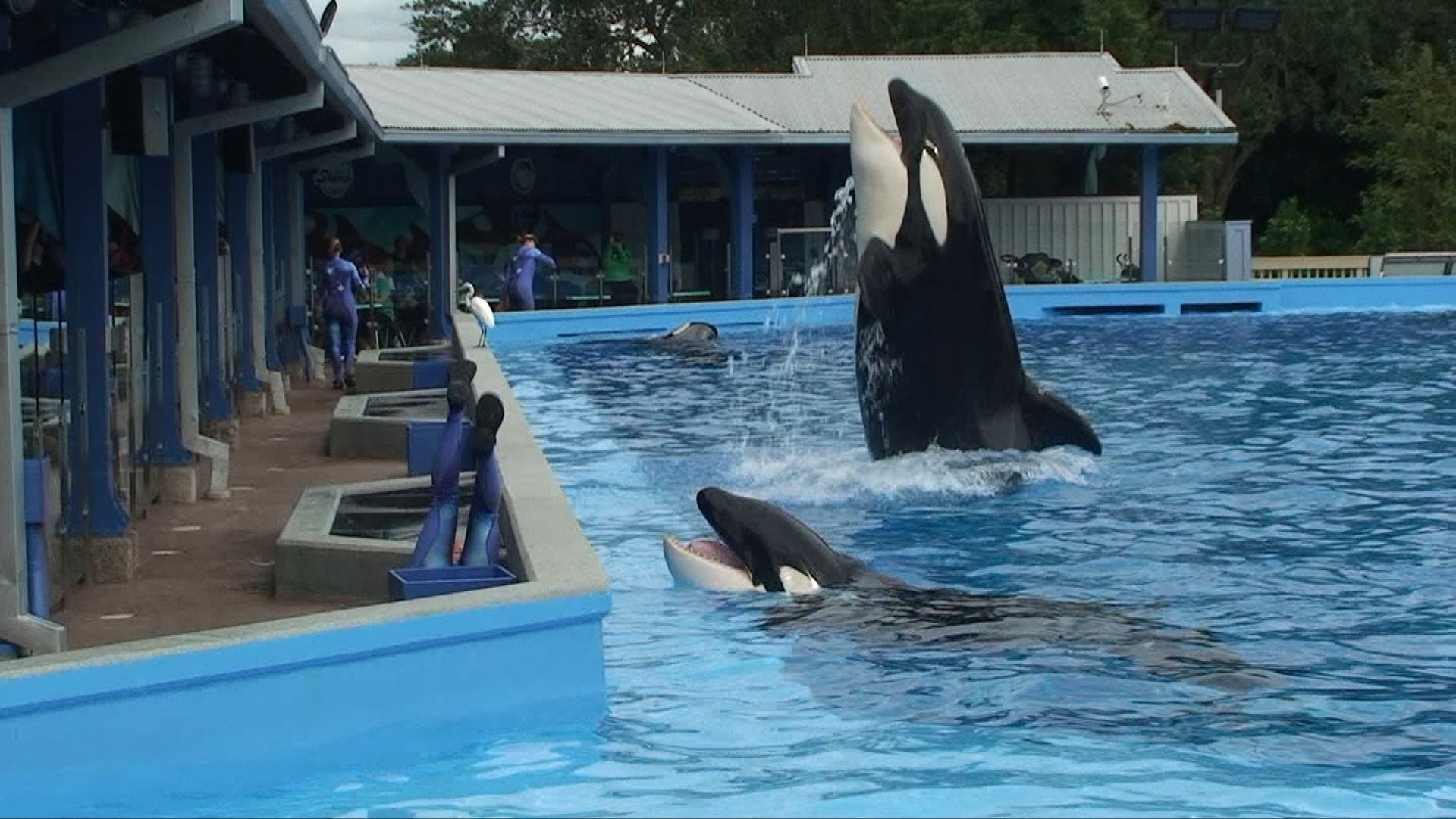Res: 1920x1080, Dine with Shamu at SeaWorld Orlando Overview - Food Offerings, Whales and  Trainers, Sea World - YouTube