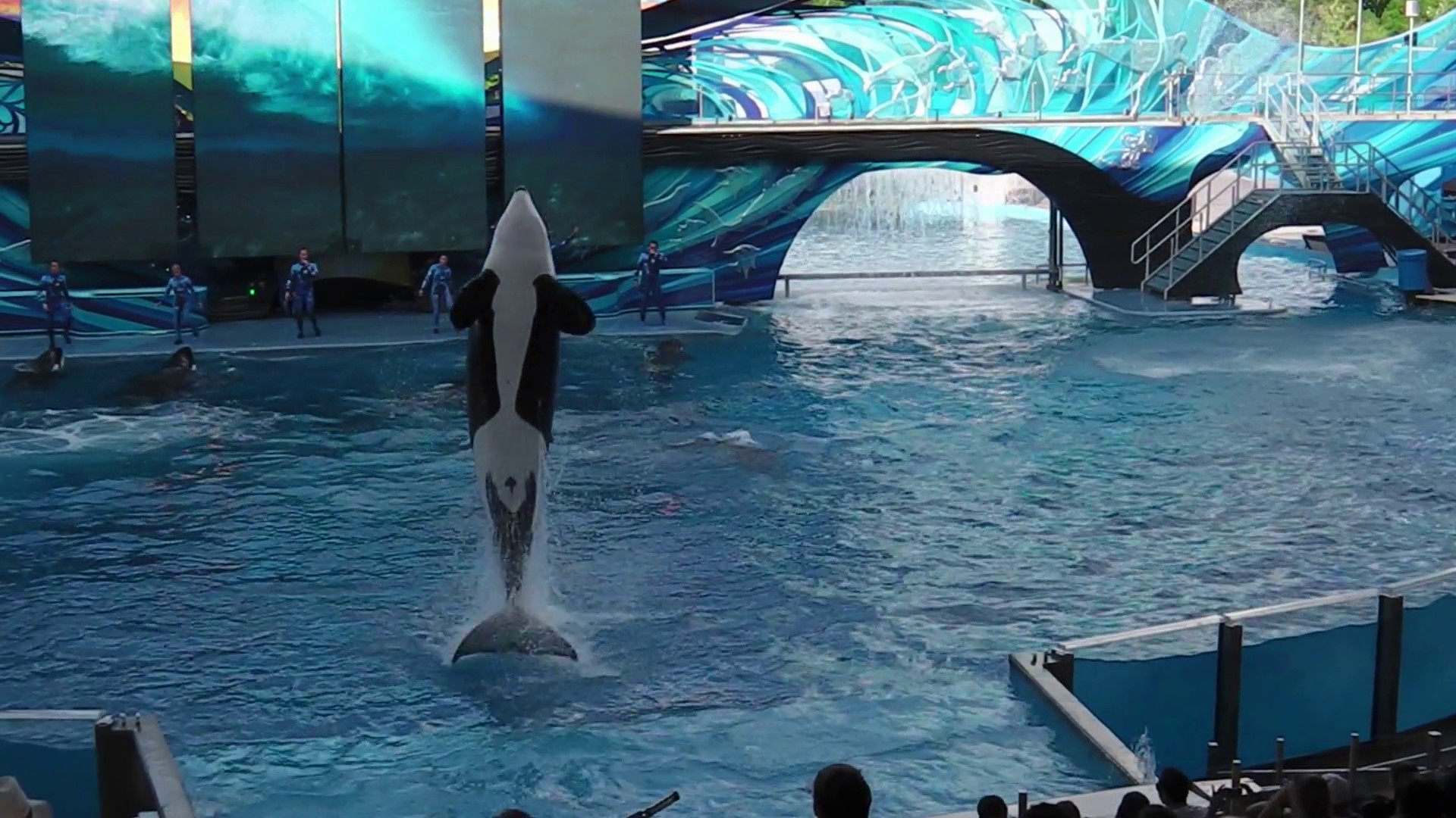 Res: 1920x1080, Orlando, Florida, United States - April 22, 2012: Tilikum, the killer  whale, performs in the shamu show at Seaworld. Tilikum is the largest and  most famous ...
