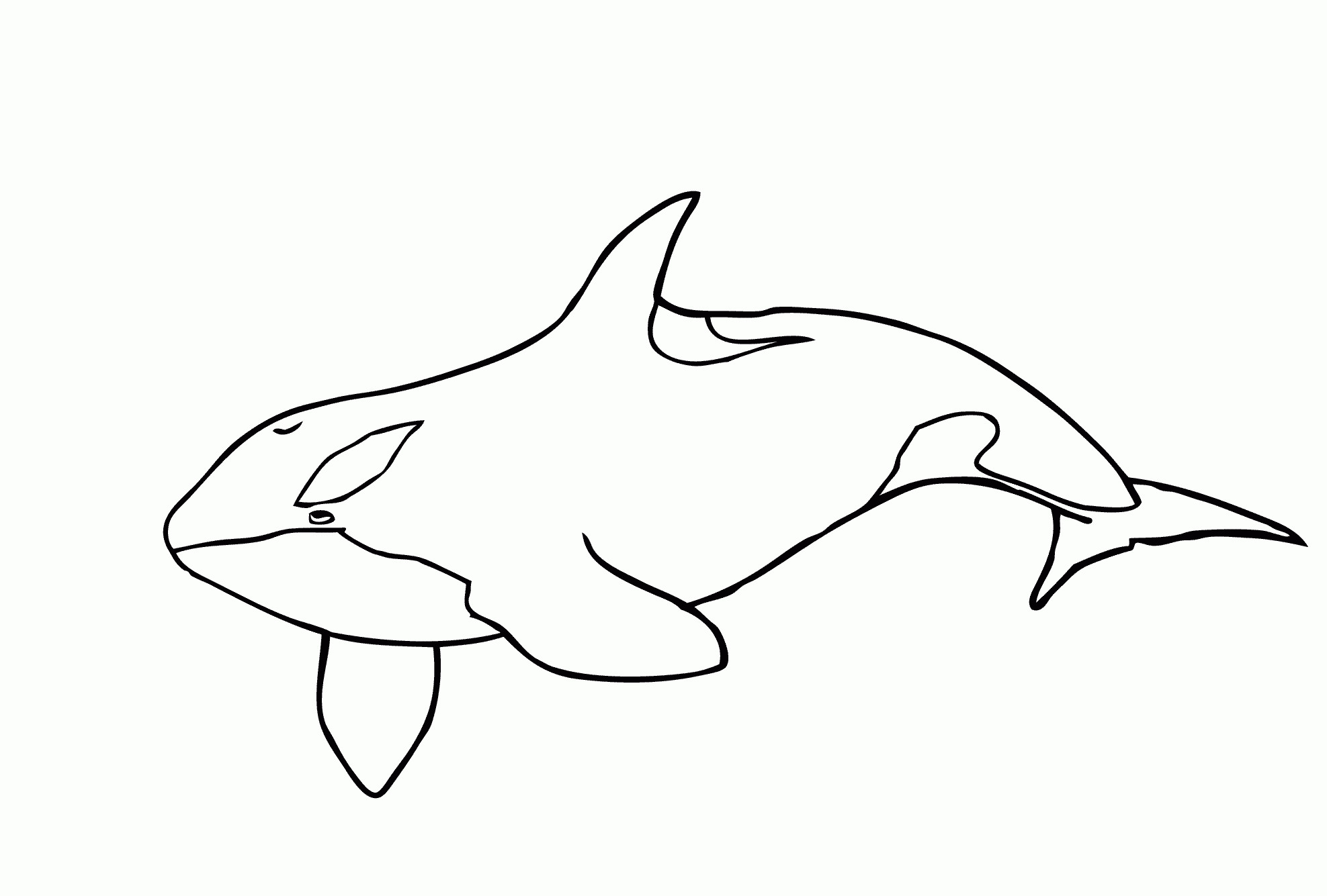 Res: 1975x1335, Lavishly Printable Whale Pictures Rare Shamu Coloring Pages Orca Page Free  In 1909