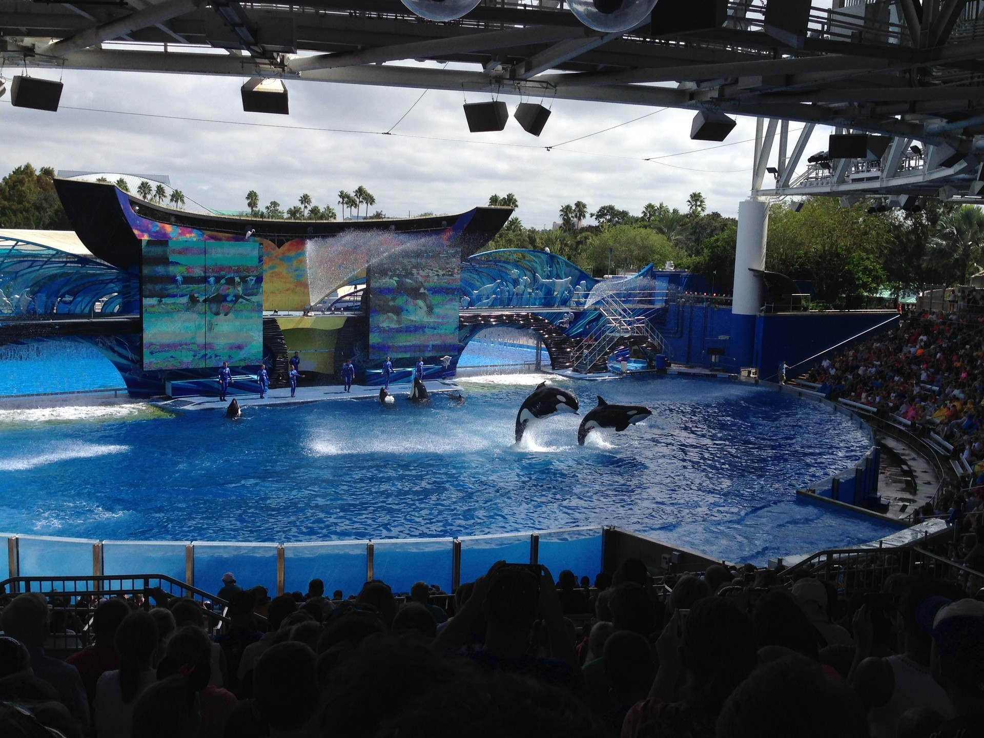 Res: 1920x1440, Shamu Show. Watching the ever elegant whales and dolphins perform!