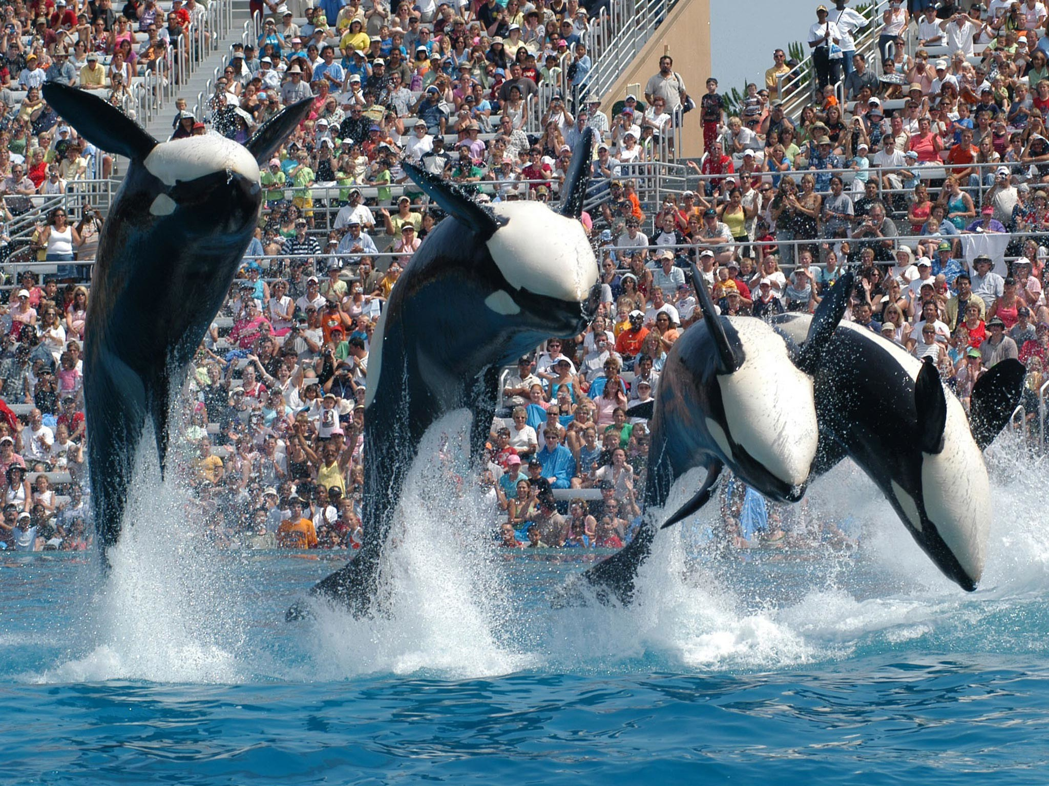 Res: 2048x1536, SeaWorld lawsuit claims park profits from 'deceptive business practices'  and that orcas suffer abusive treatment | The Independent