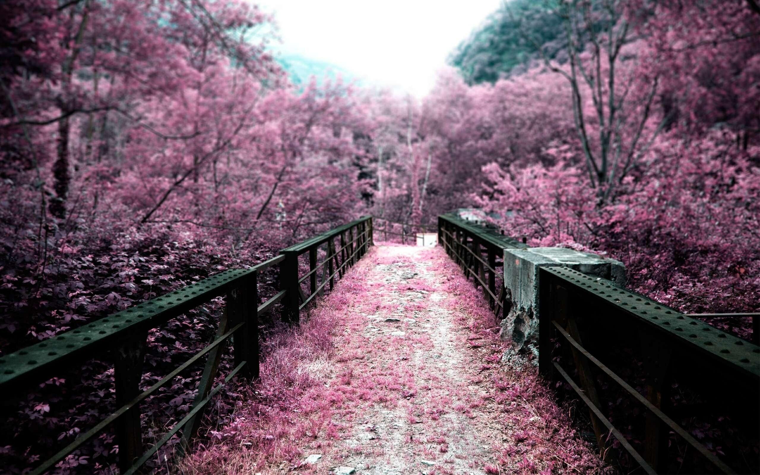 Res: 2560x1600, japan sakura flowers view wide