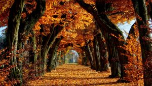 Autumn Screen wallpapers