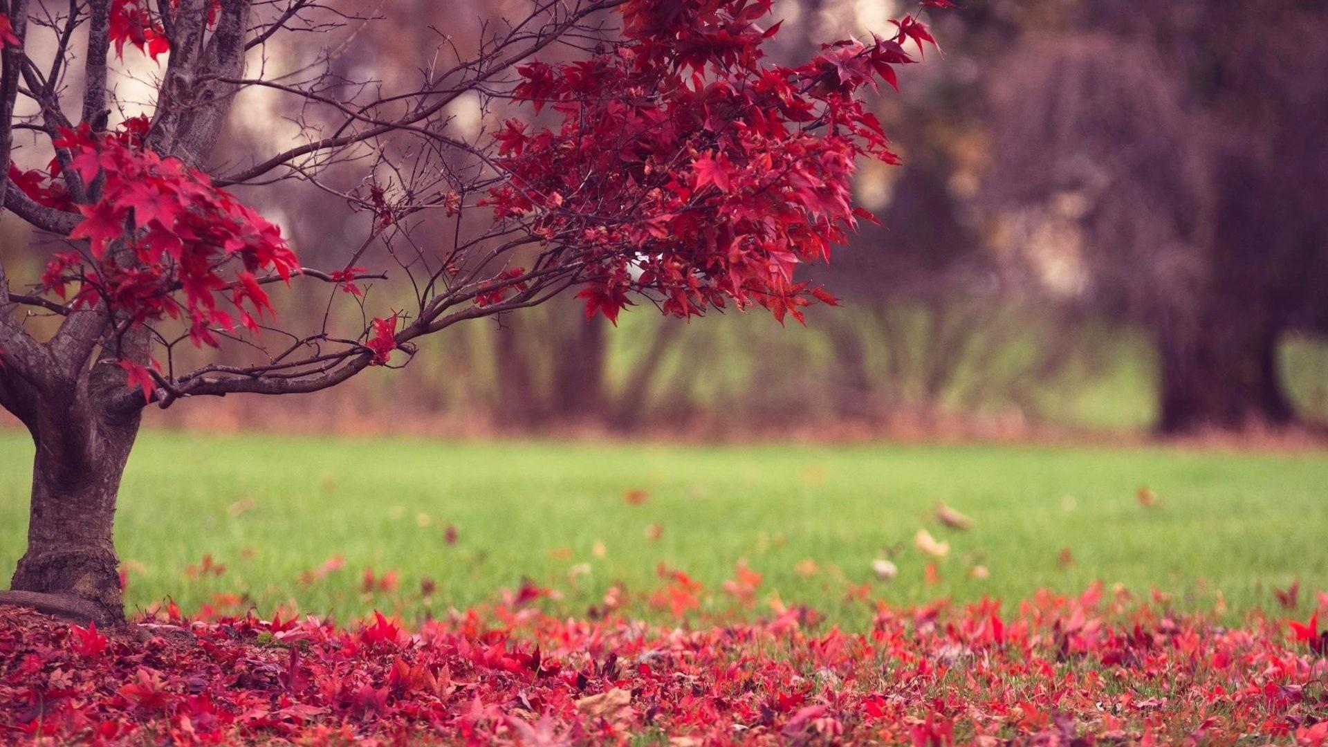 Autumn Screen Wallpapers Hd Wallpaper Collections 4kwallpaper Wiki