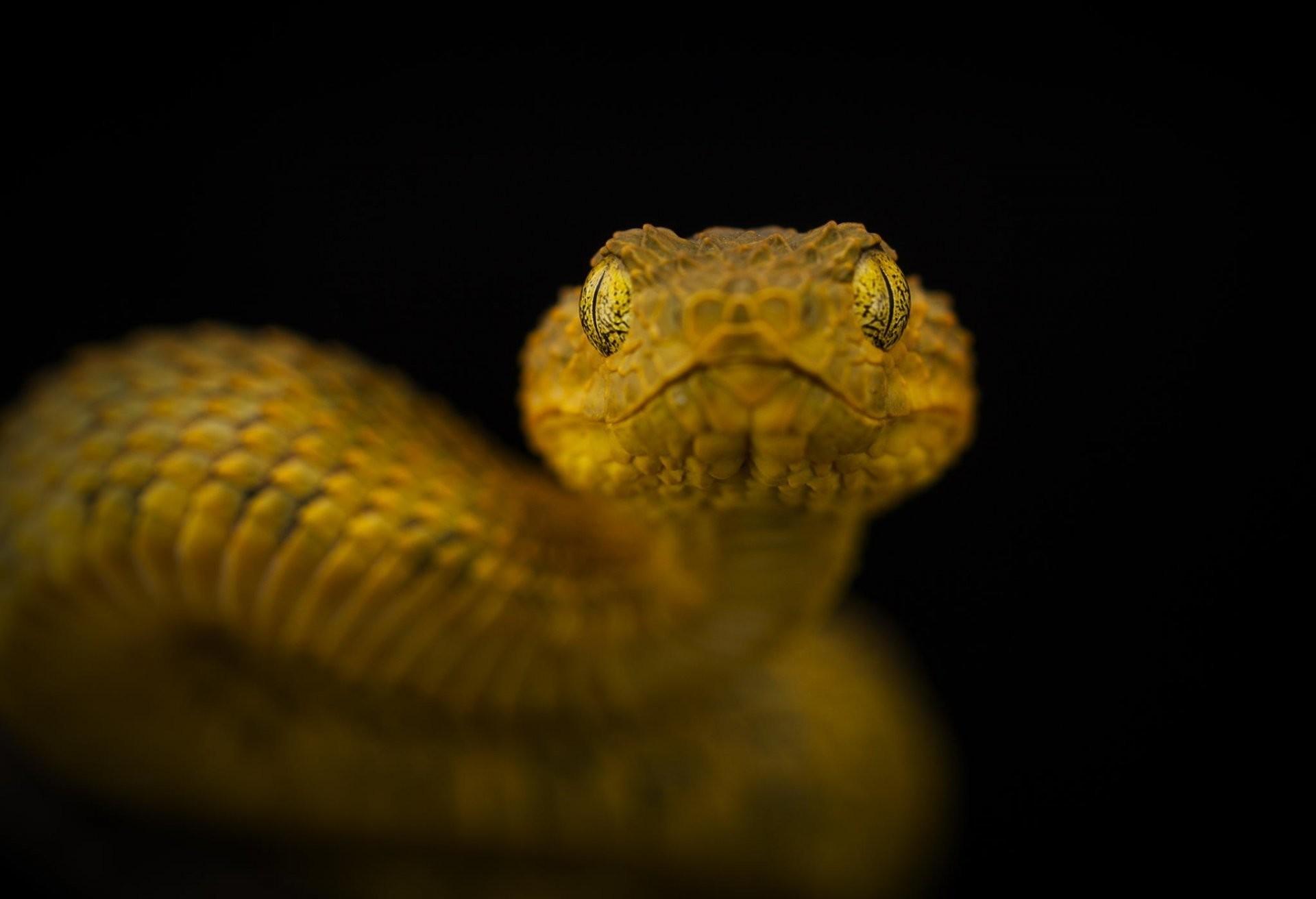 Res: 1920x1312, eye to eye snake poisonous
