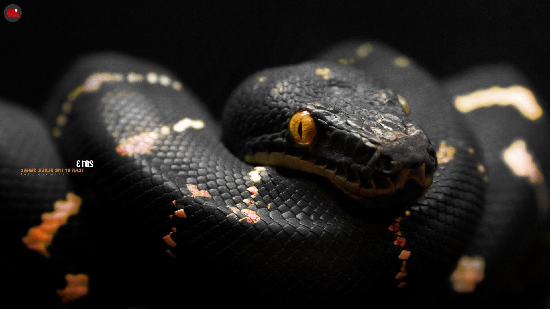 Res: 1920x1080, eyes snake black orange reptiles wallpaper and background