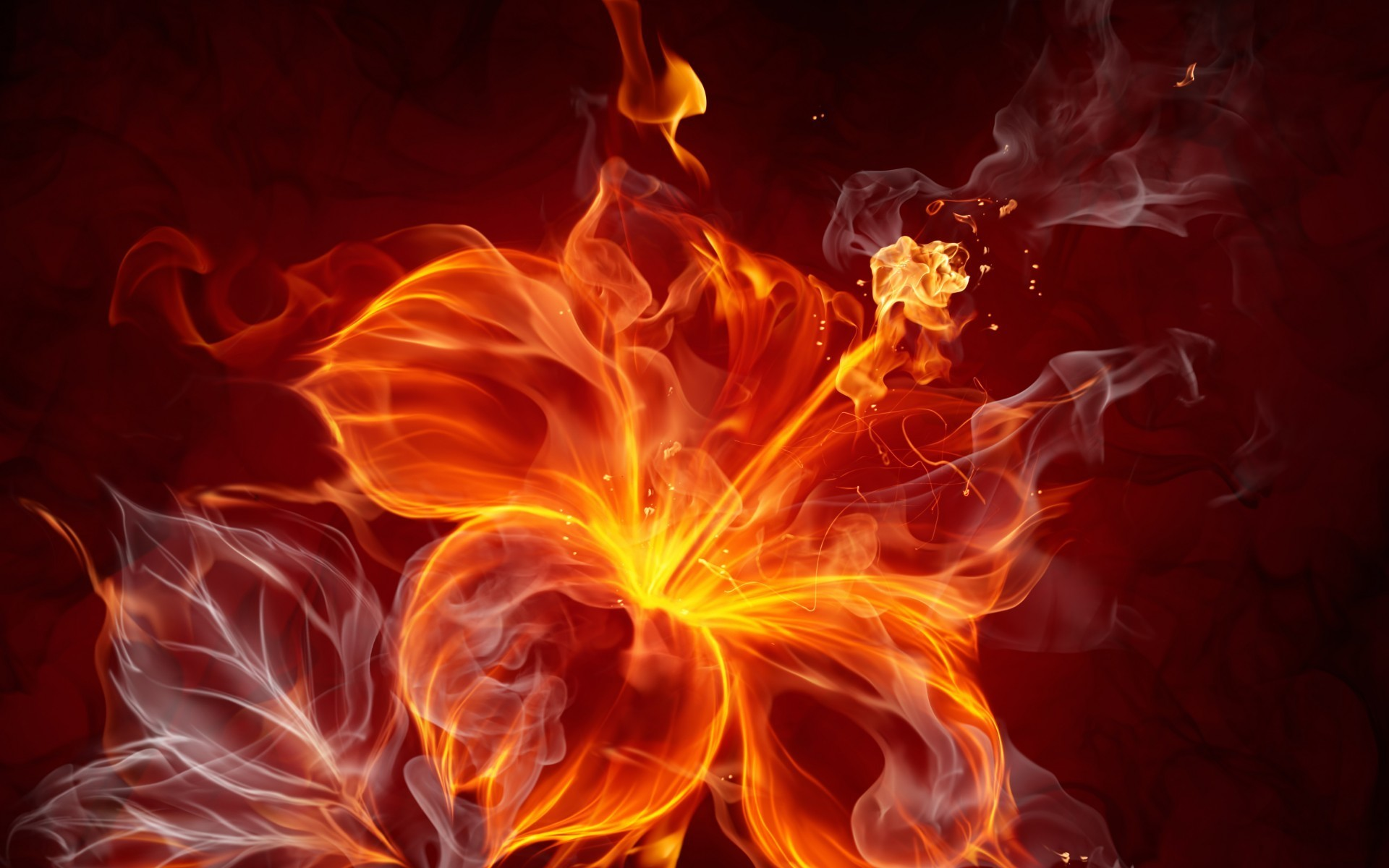 Res: 1920x1200,  Bild: Feuer Hibiscus wallpapers and stock photos. Â«