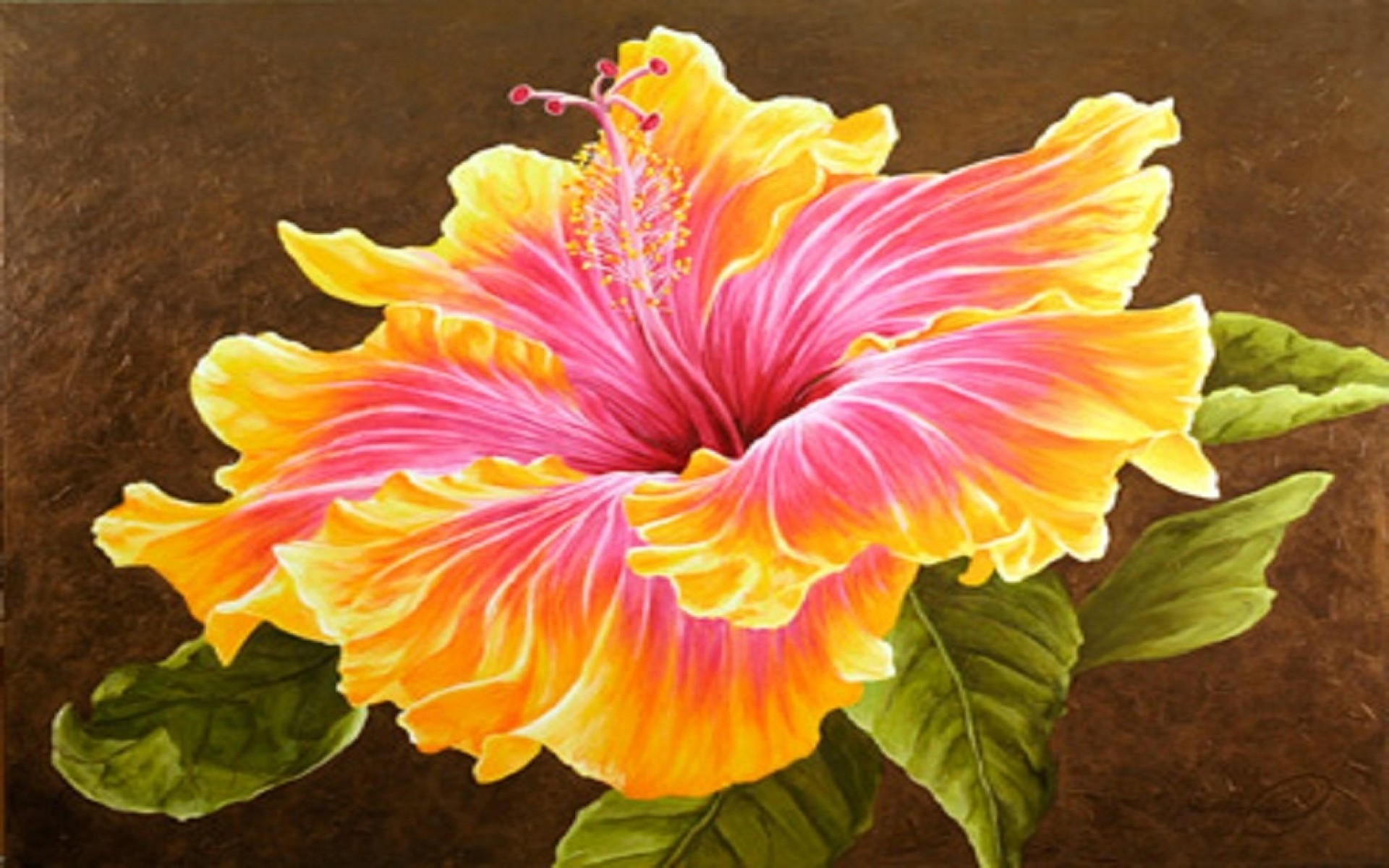 Res: 1920x1200, Image: Beautiful Hibiscus Flower wallpapers and stock photos. Â«