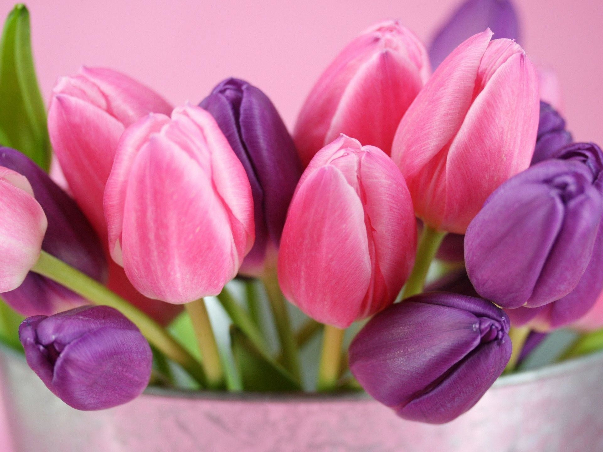 Res: 1920x1440, Pink Tulips Wallpapers - HD Wallpapers Inn