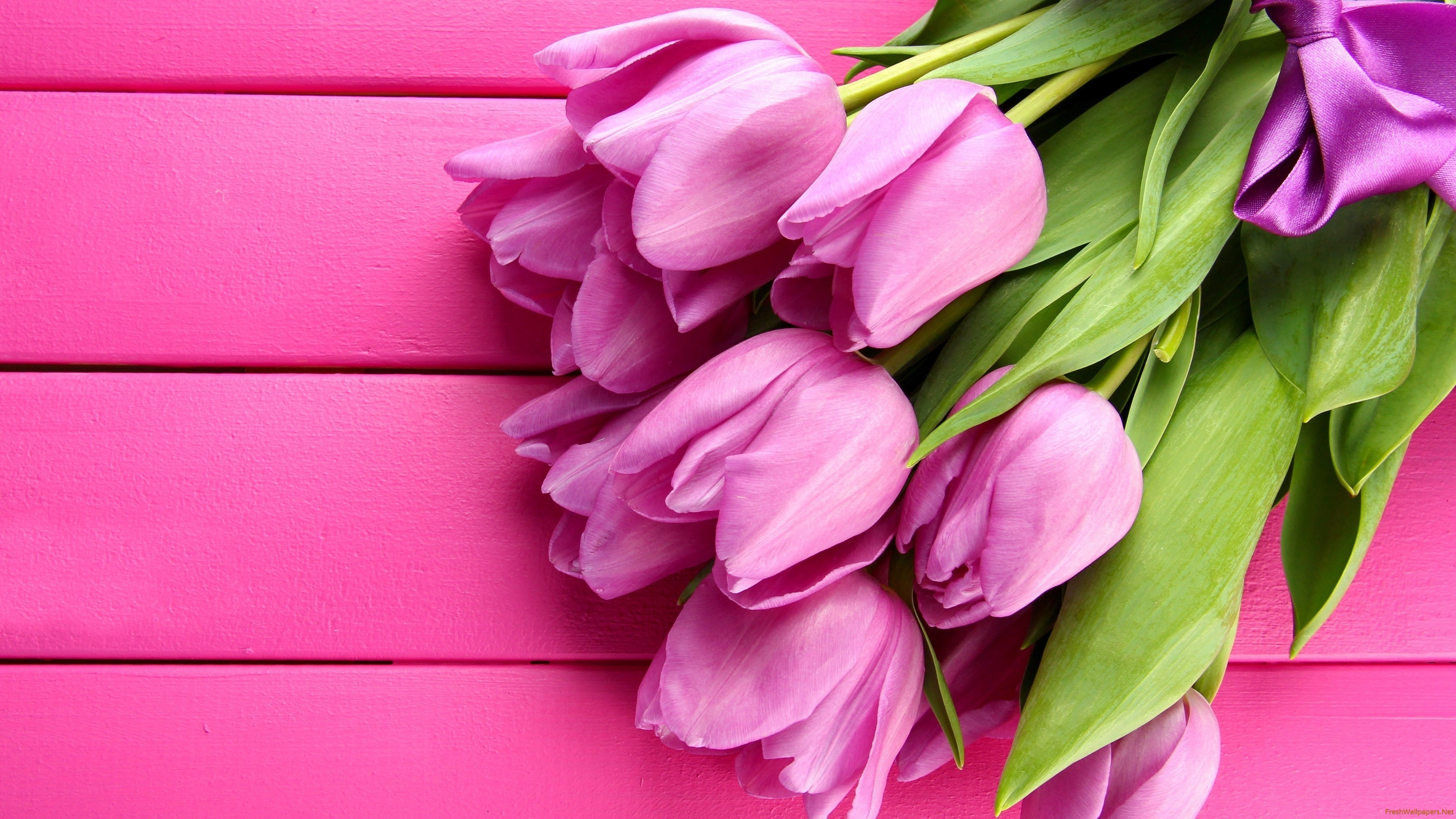 Res: 3840x2160, Original Resolution:  · gorgeous-pink-tulips Wallpaper: 1024x768