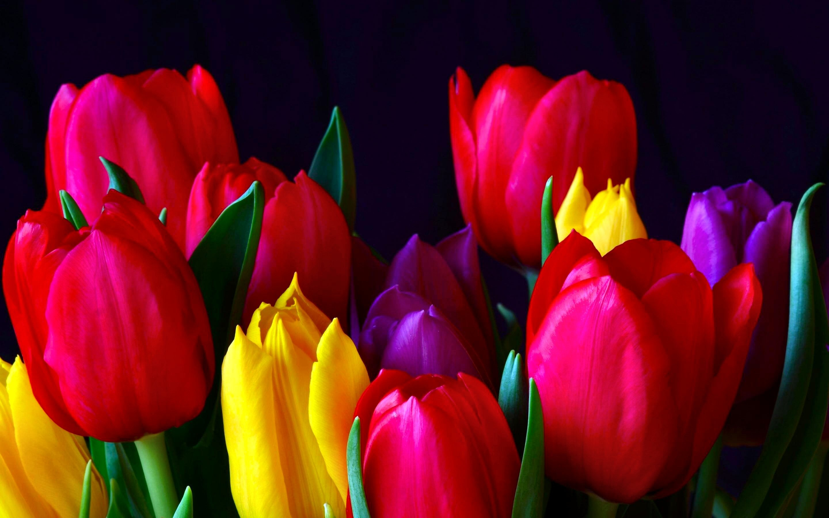 Res: 2880x1800, HD Wallpaper | Background Image ID:328195.  Earth Tulip