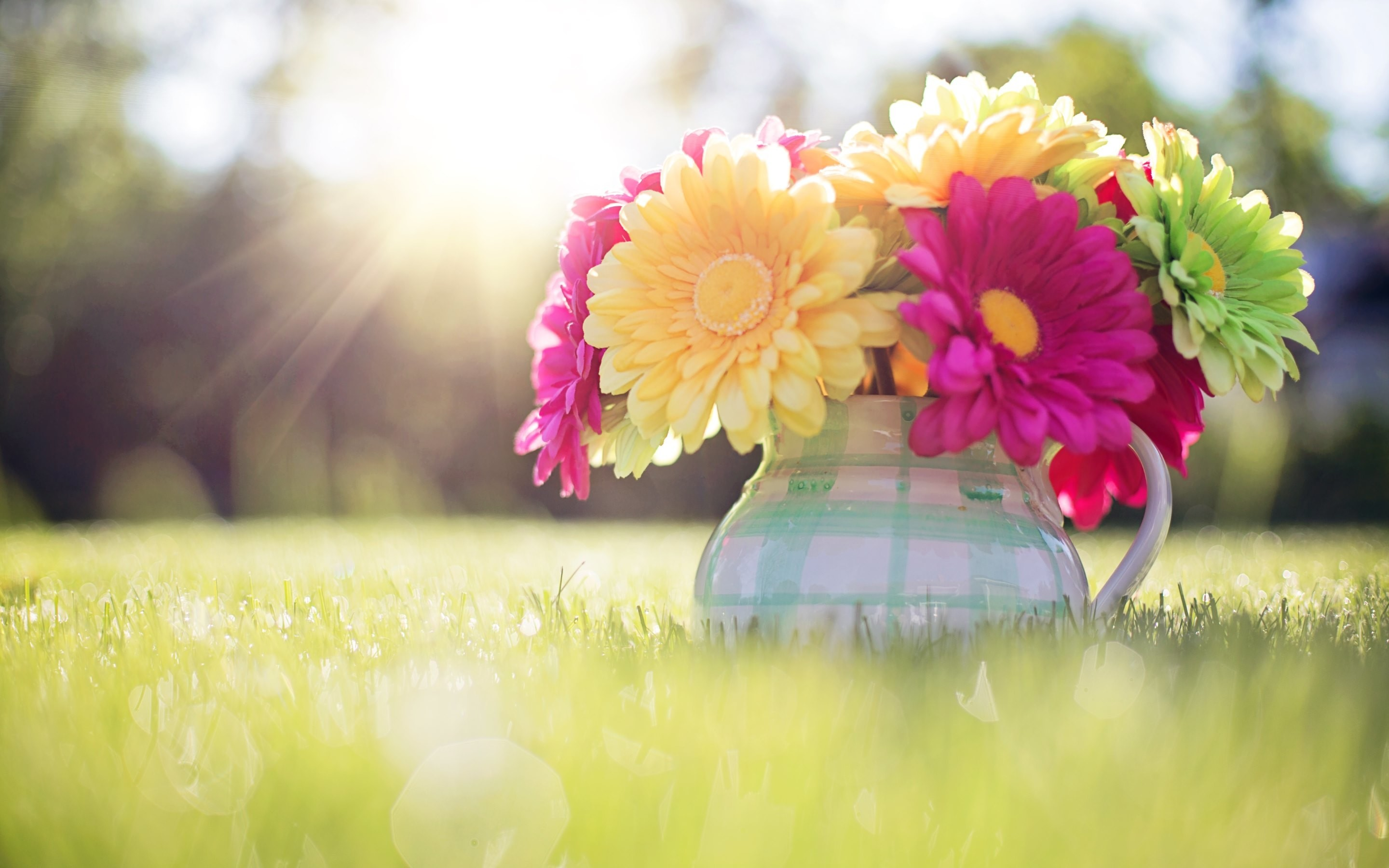 Res: 2880x1800,  colored flowers image hd