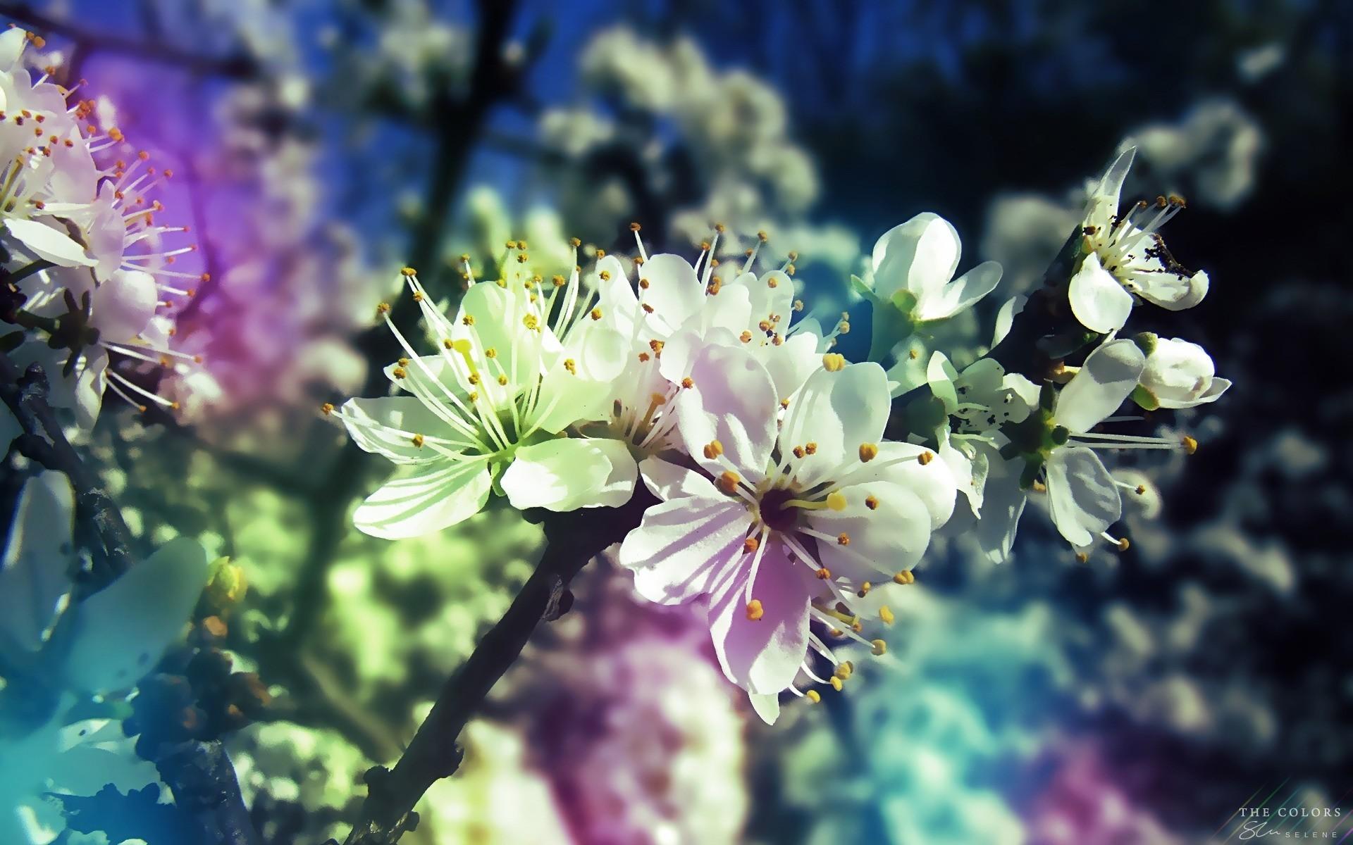Res: 1920x1200, Beautiful Petals Spring Wallpaper