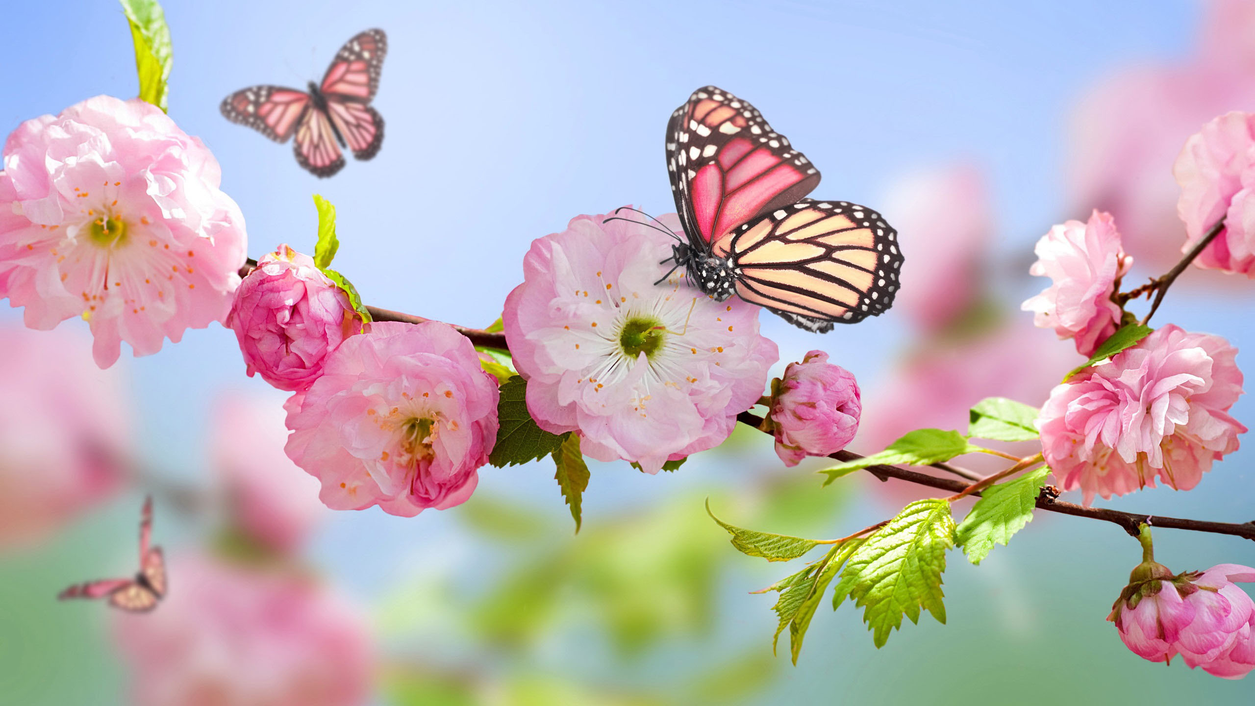 Res: 2560x1440, Spring Wallpapers