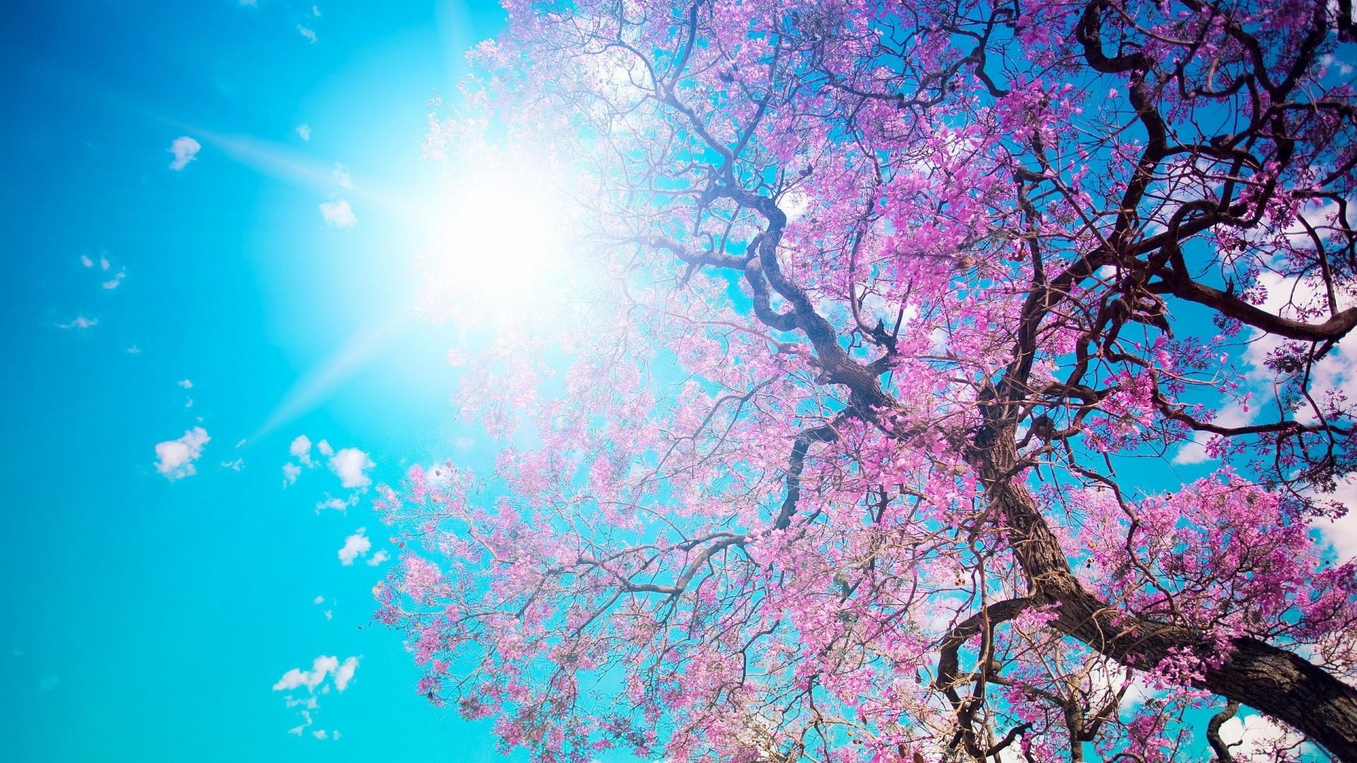 Res: 1920x1080, Pink Rose Spring Wallpaper. Â«