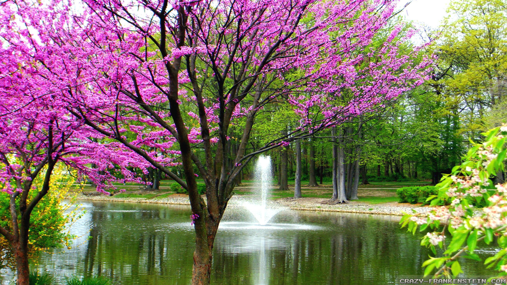 Res: 1920x1080, 4. free-spring-wallpapers-for-desktop4-600x338