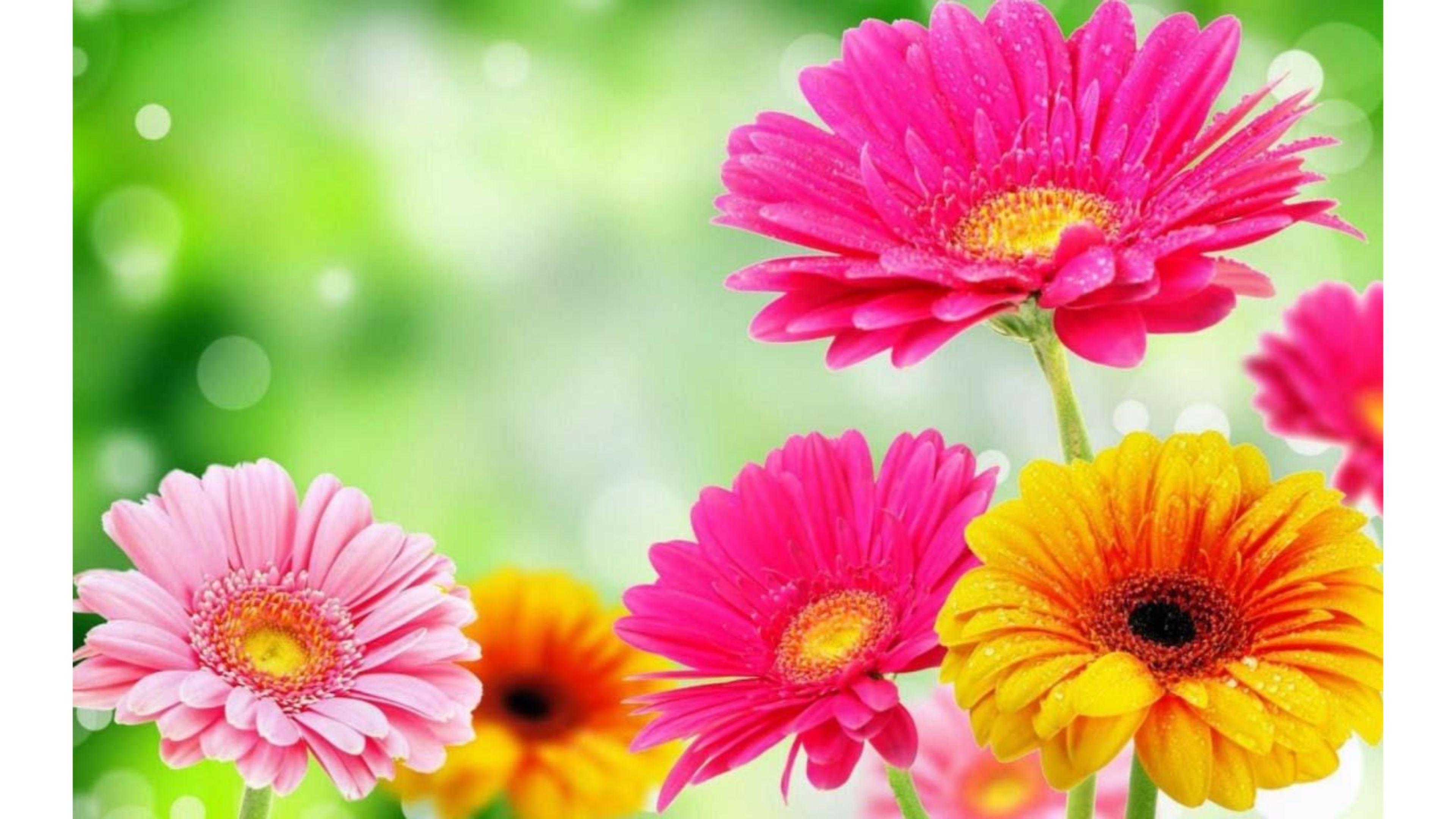 Res: 3840x2160, Beautiful 4K Spring Wallpaper
