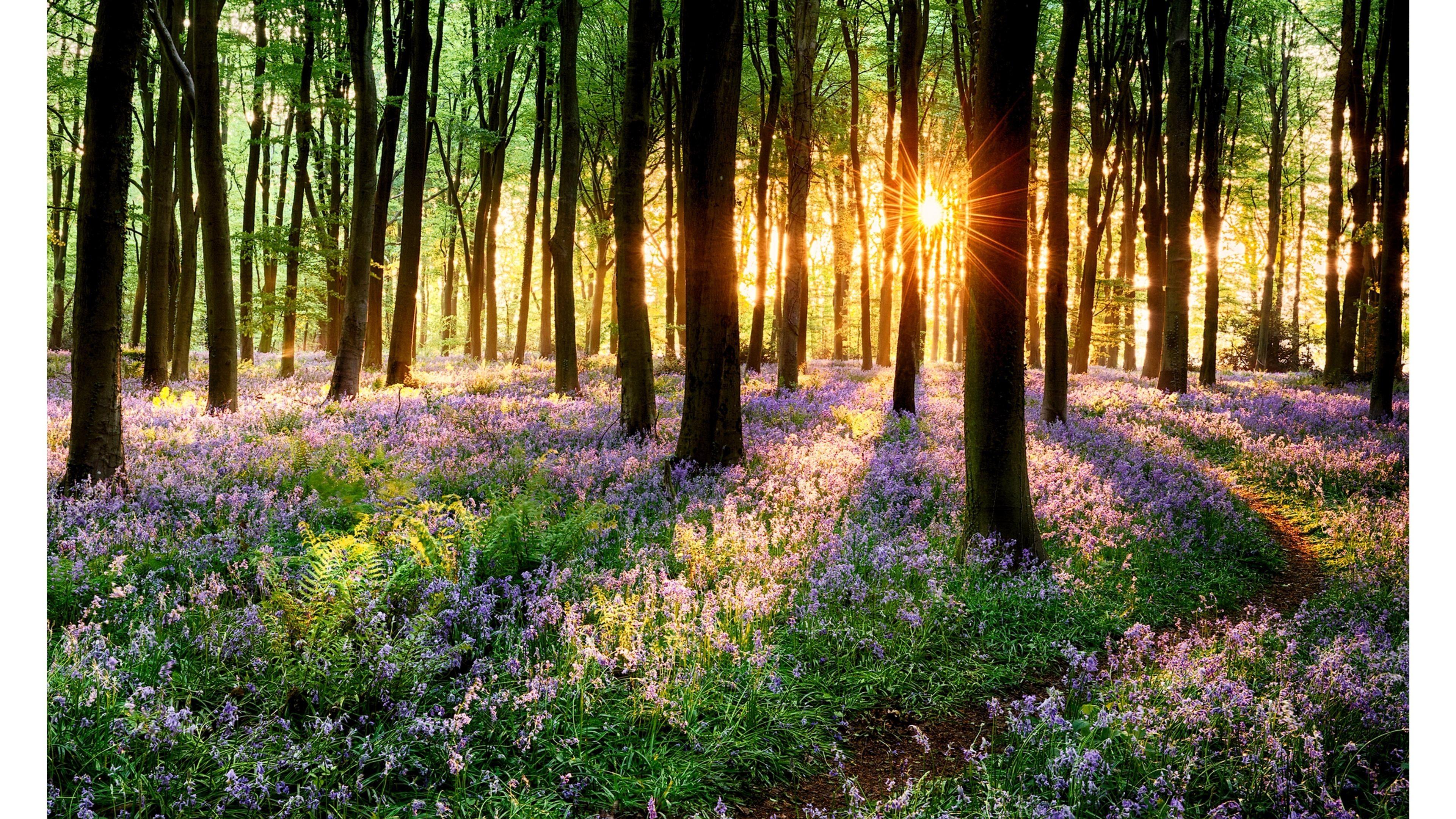 Res: 3840x2160, Sun Shining Through Spring 4K Wallpapers