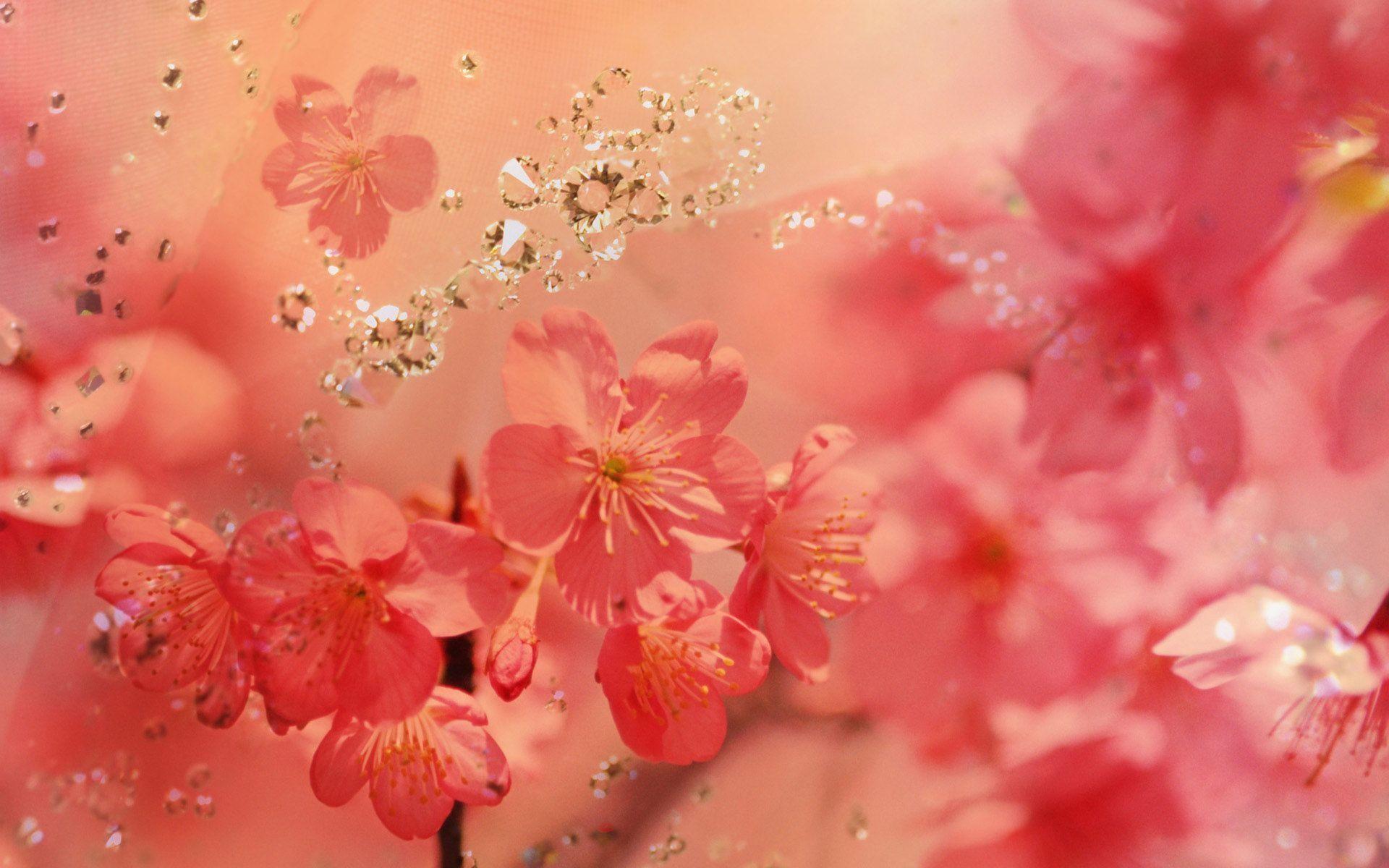Res: 1920x1200, Beautiful Spring - Spring Wallpaper (27865750) - Fanpop