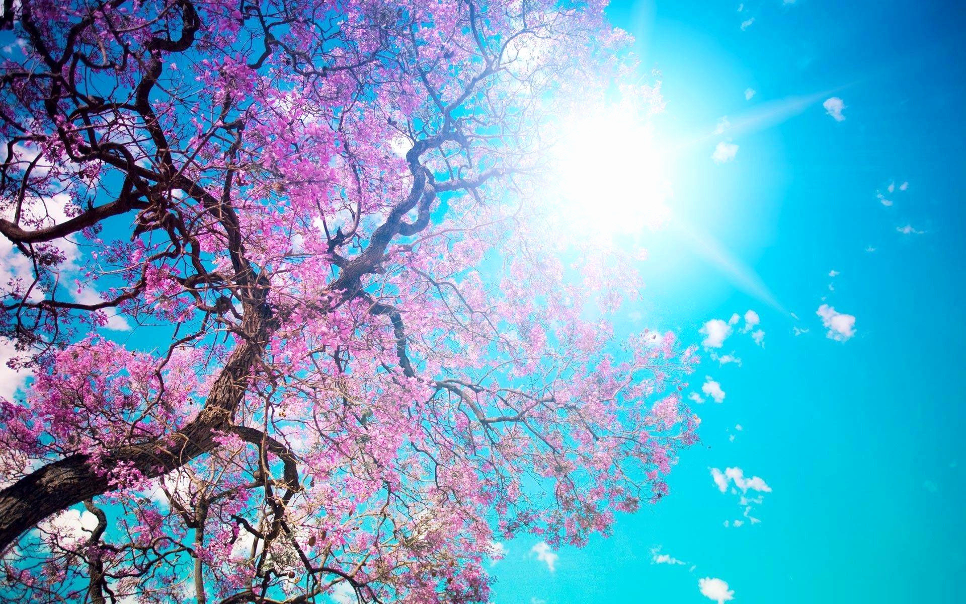 Res: 1920x1200, Spring Wallpapers Awesome Best Wallpaper Ever Graphics Impremedia