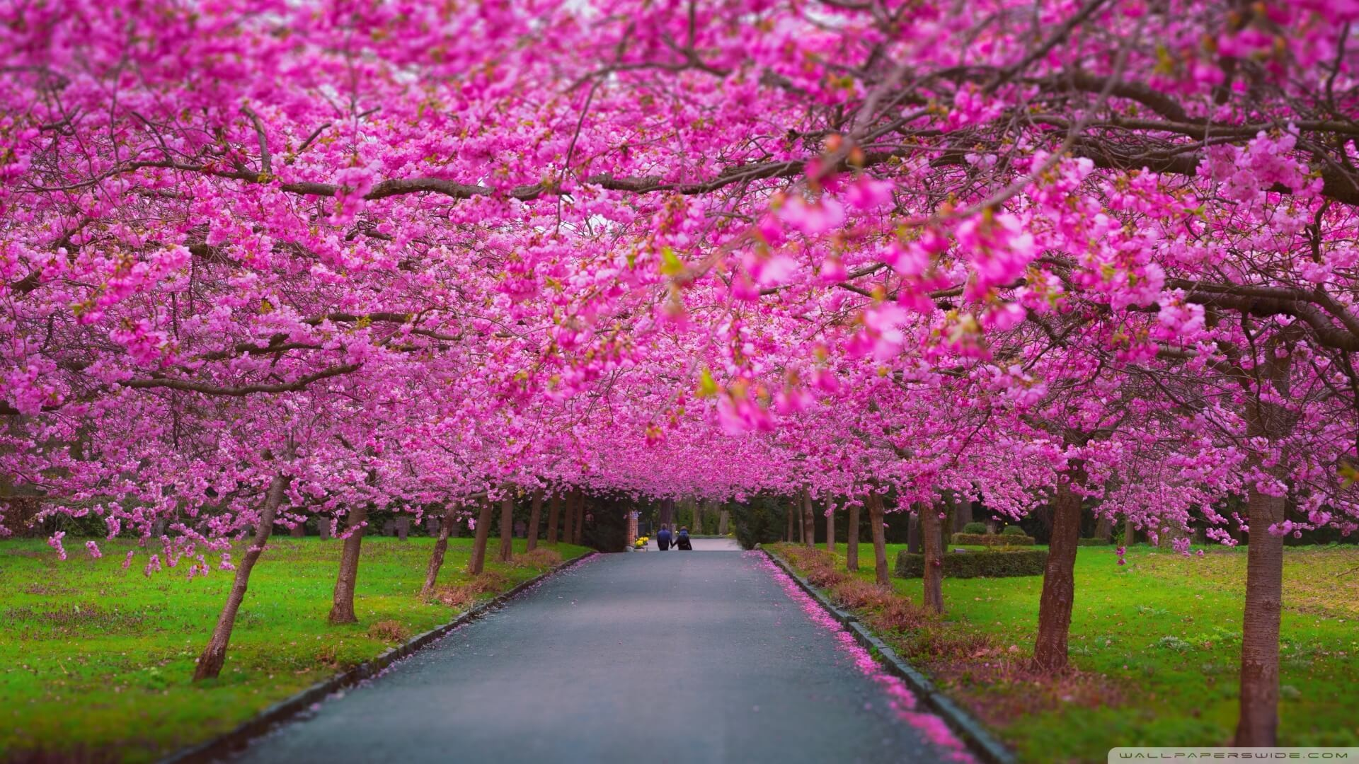 Res: 1920x1080, Spring Wallpapers For iPad