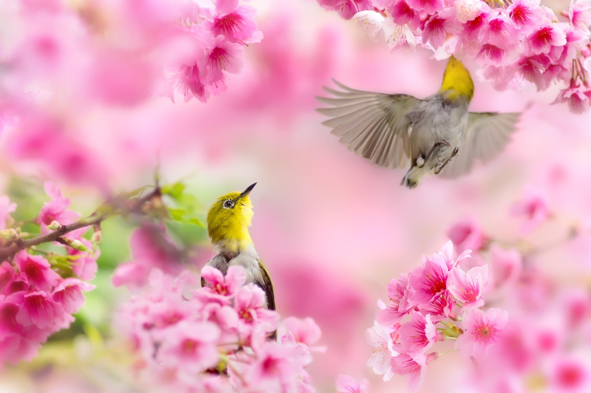 Res: 2048x1365, Spring Backgrounds Free